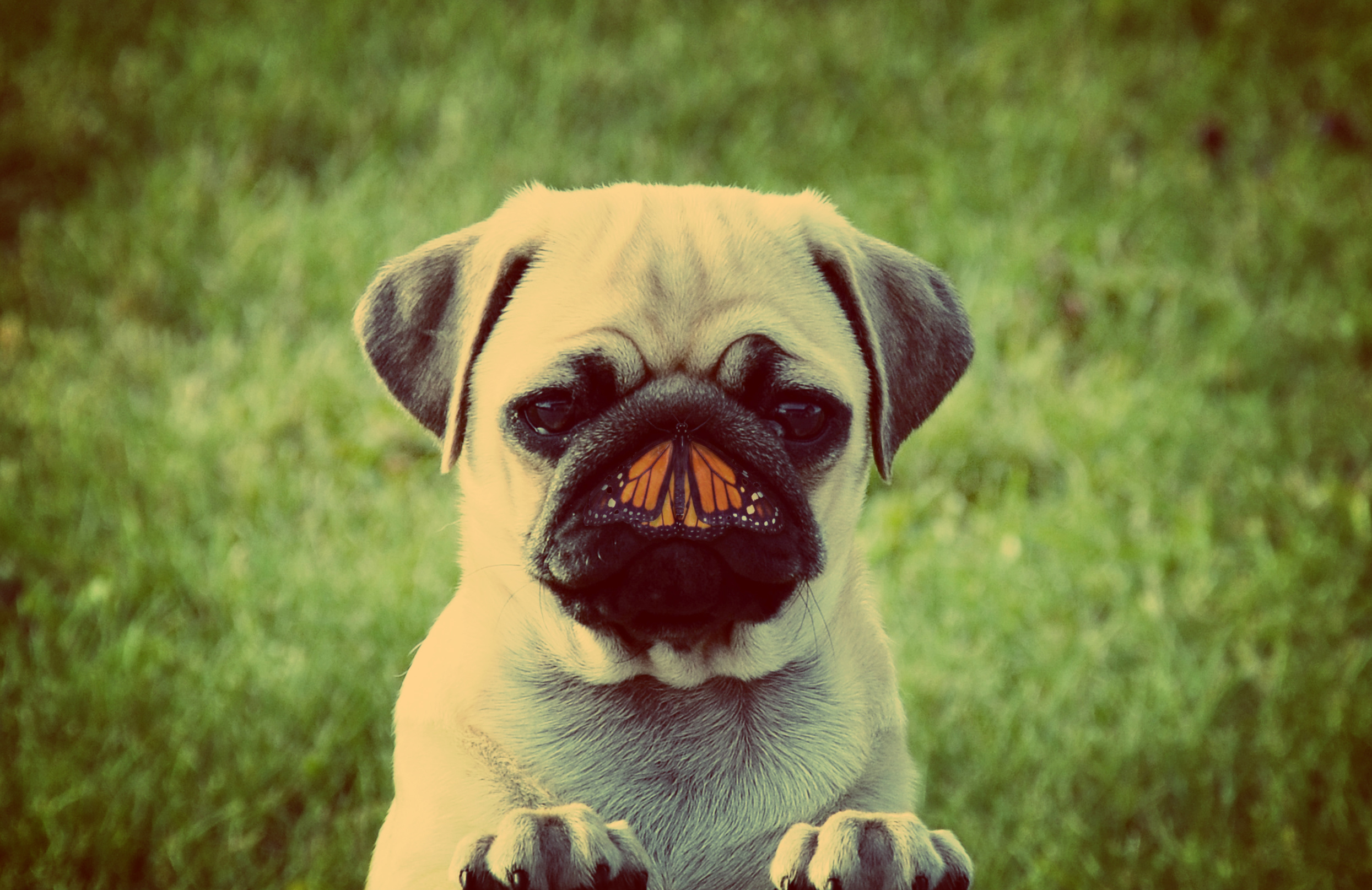 Dog and butterfly - unlikely friends concept photo