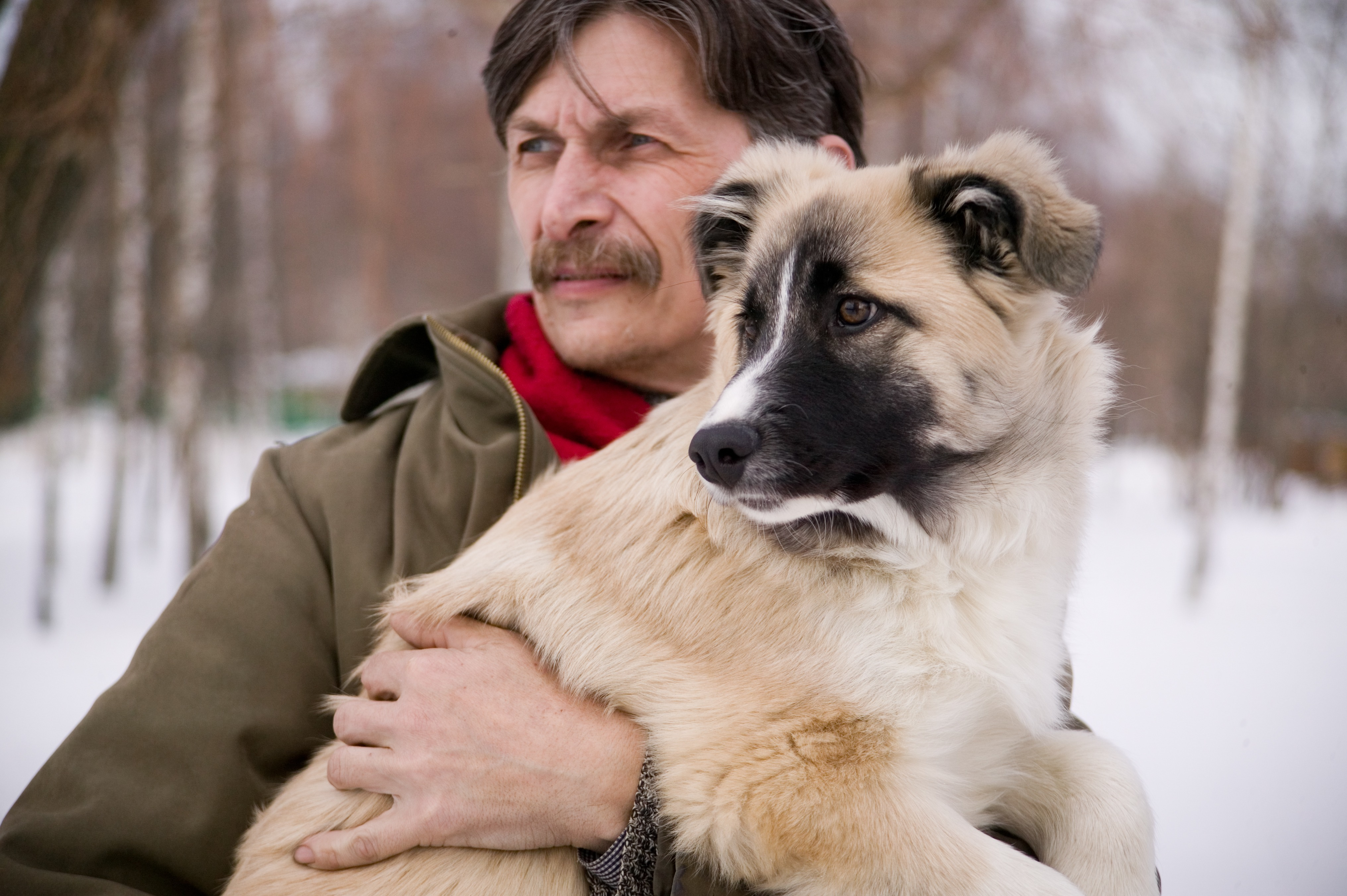 Free Images : people, puppy, male, animals, humanity, street dog ...