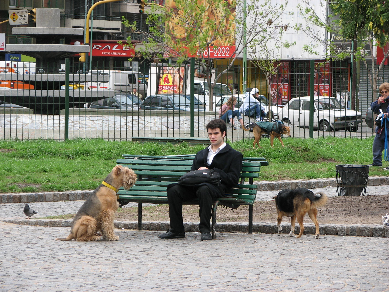 Dog and man, Animal, Paw, Tail, Street, HQ Photo