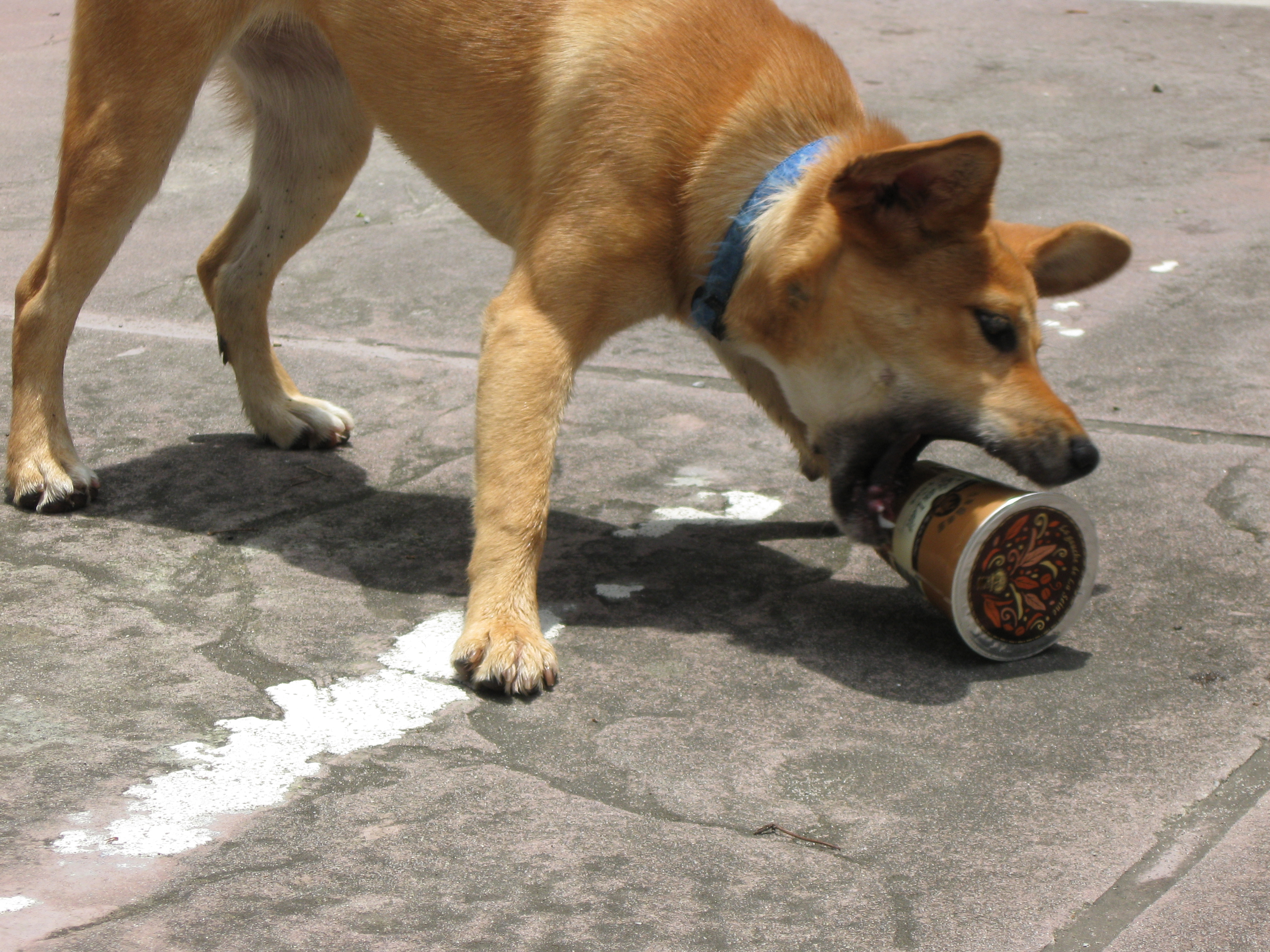 Dog attacking coffee cup photo