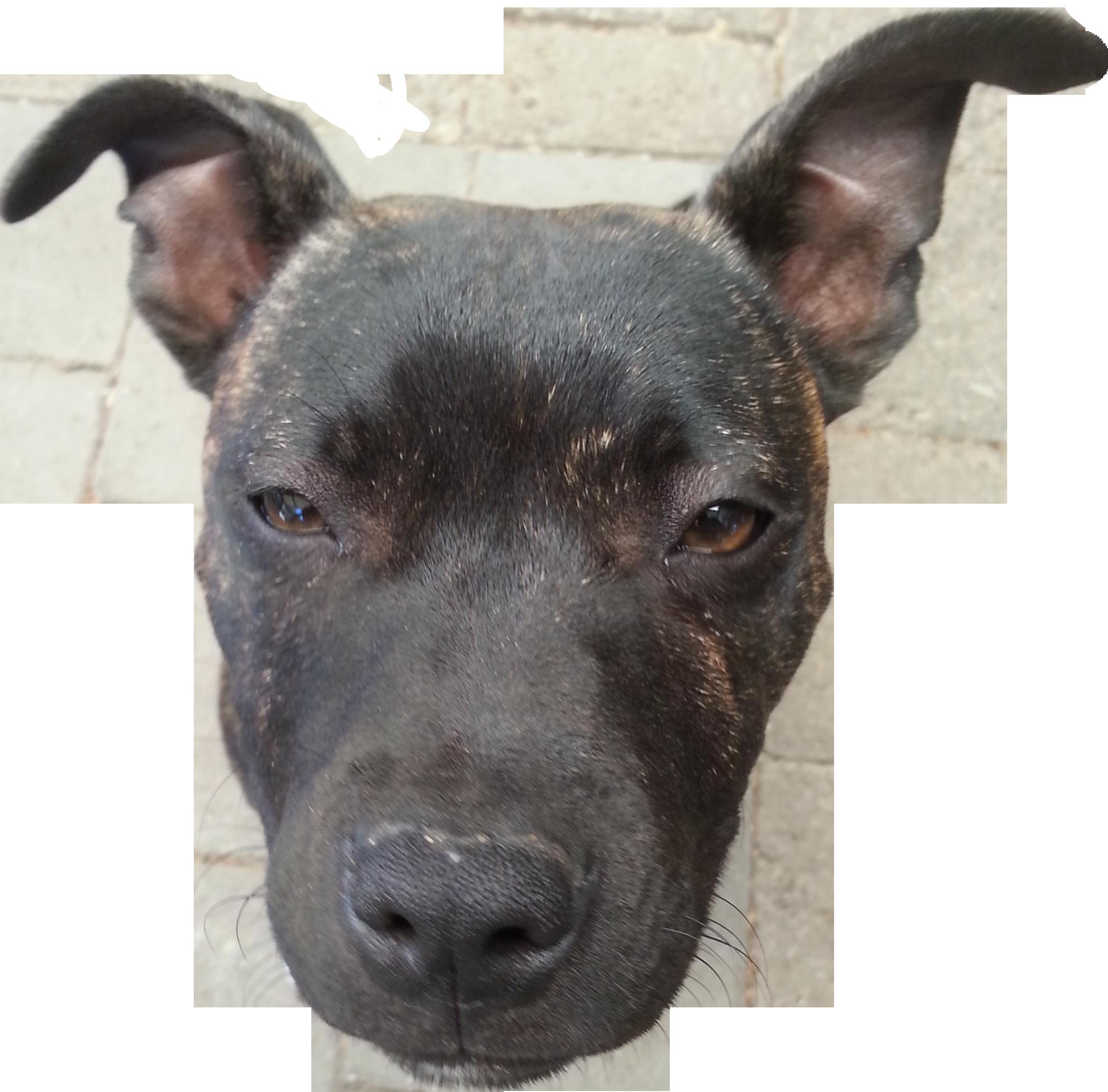 My dog looks like she's a floating head : pics