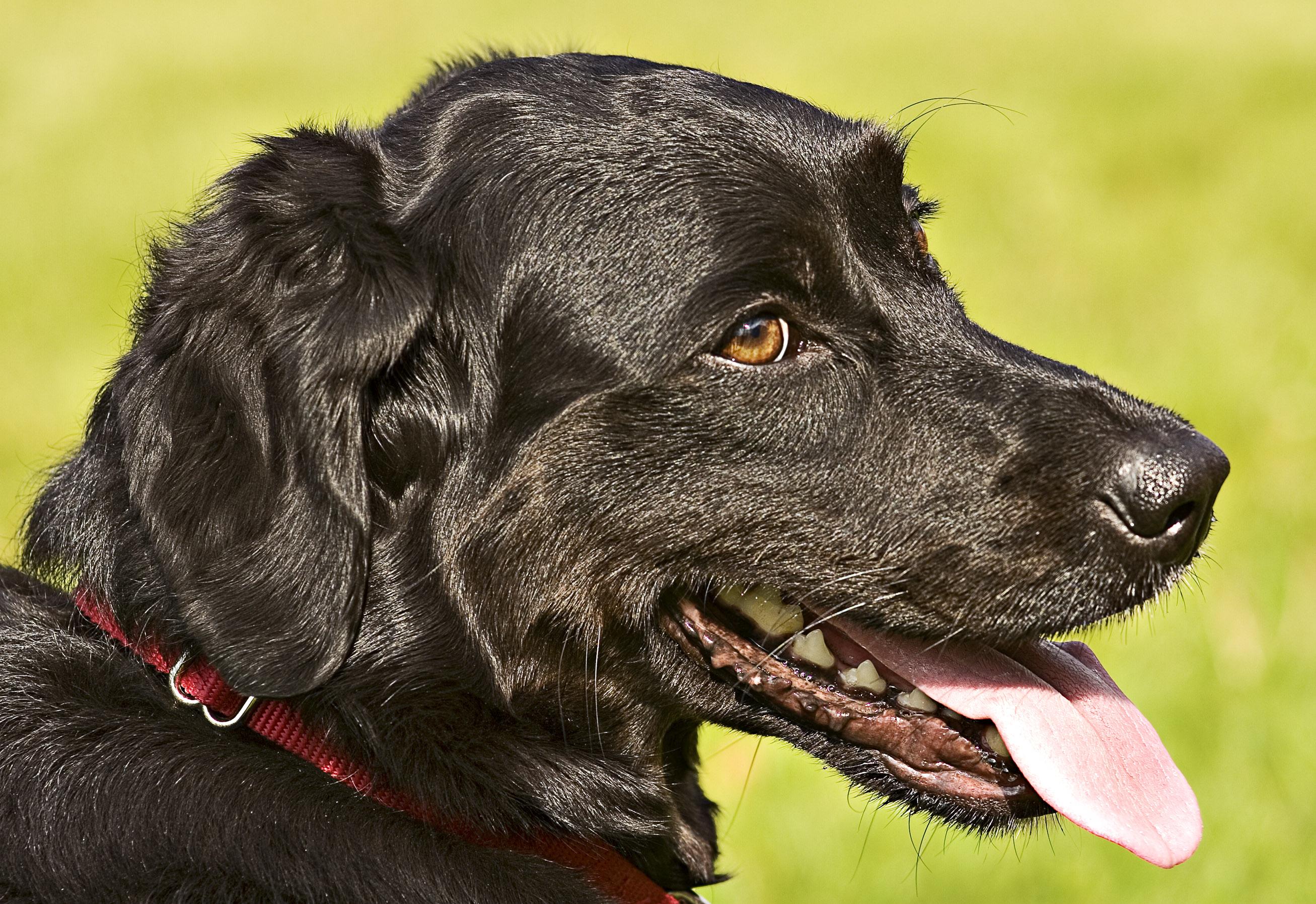 File:Dog head.jpg - Wikimedia Commons