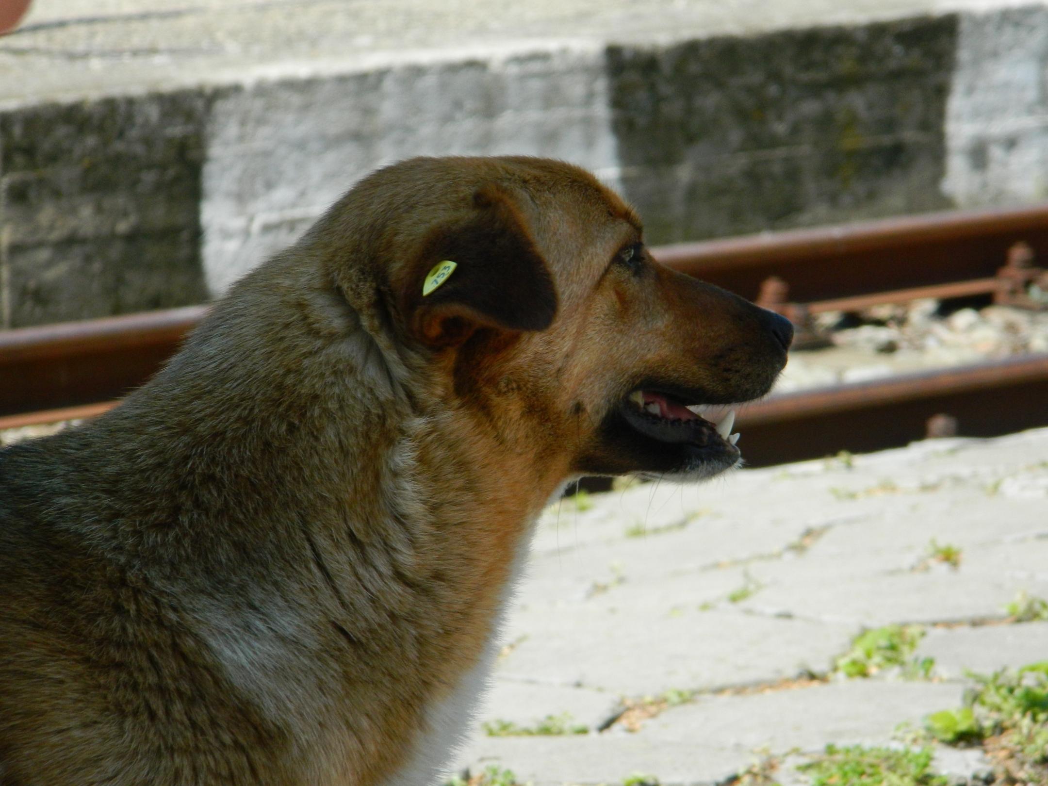 Dog Head, Animal, Dog, Head, Pet, HQ Photo