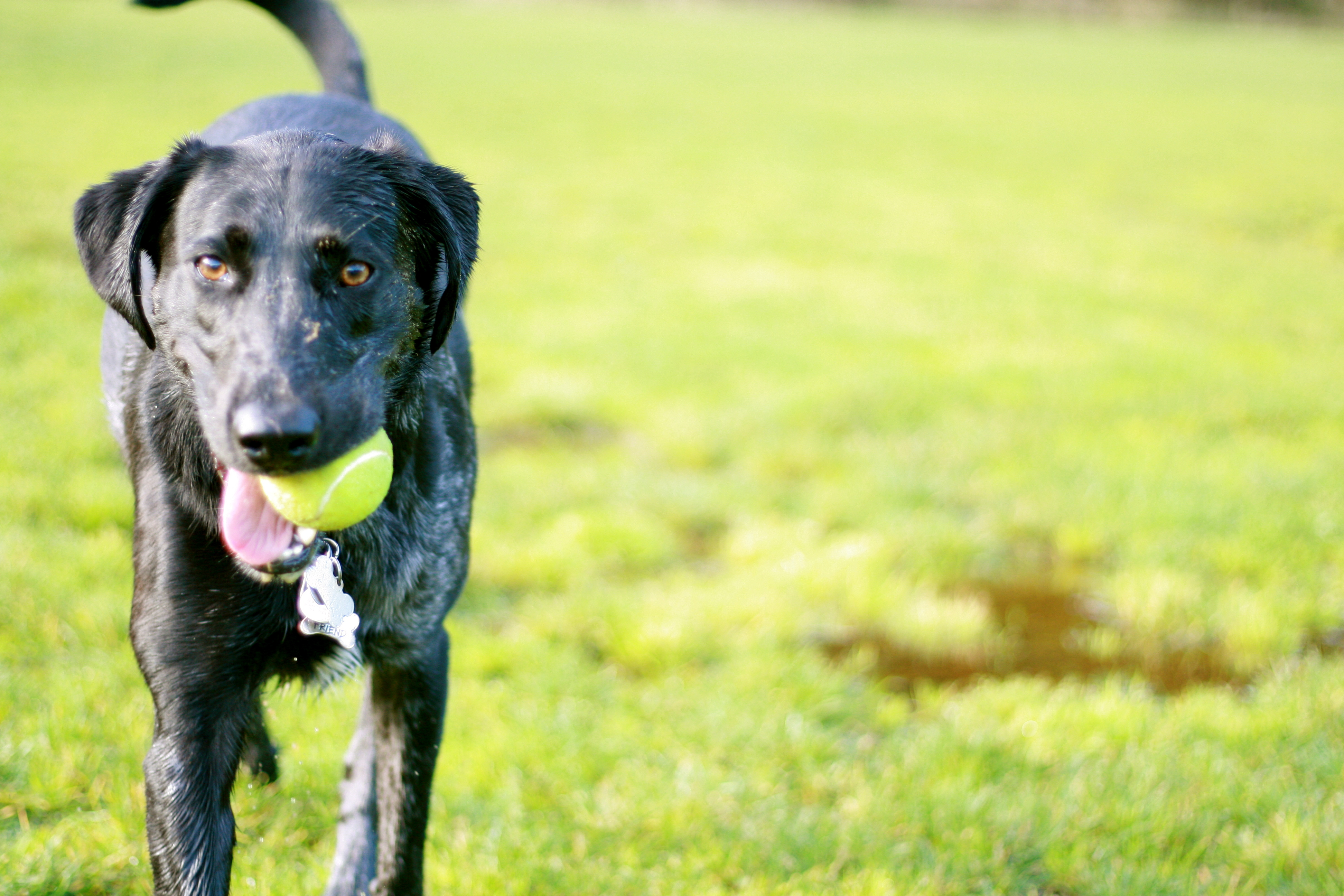 The Top 5 Tips for Getting Ready for the Dog Park This Summer ...