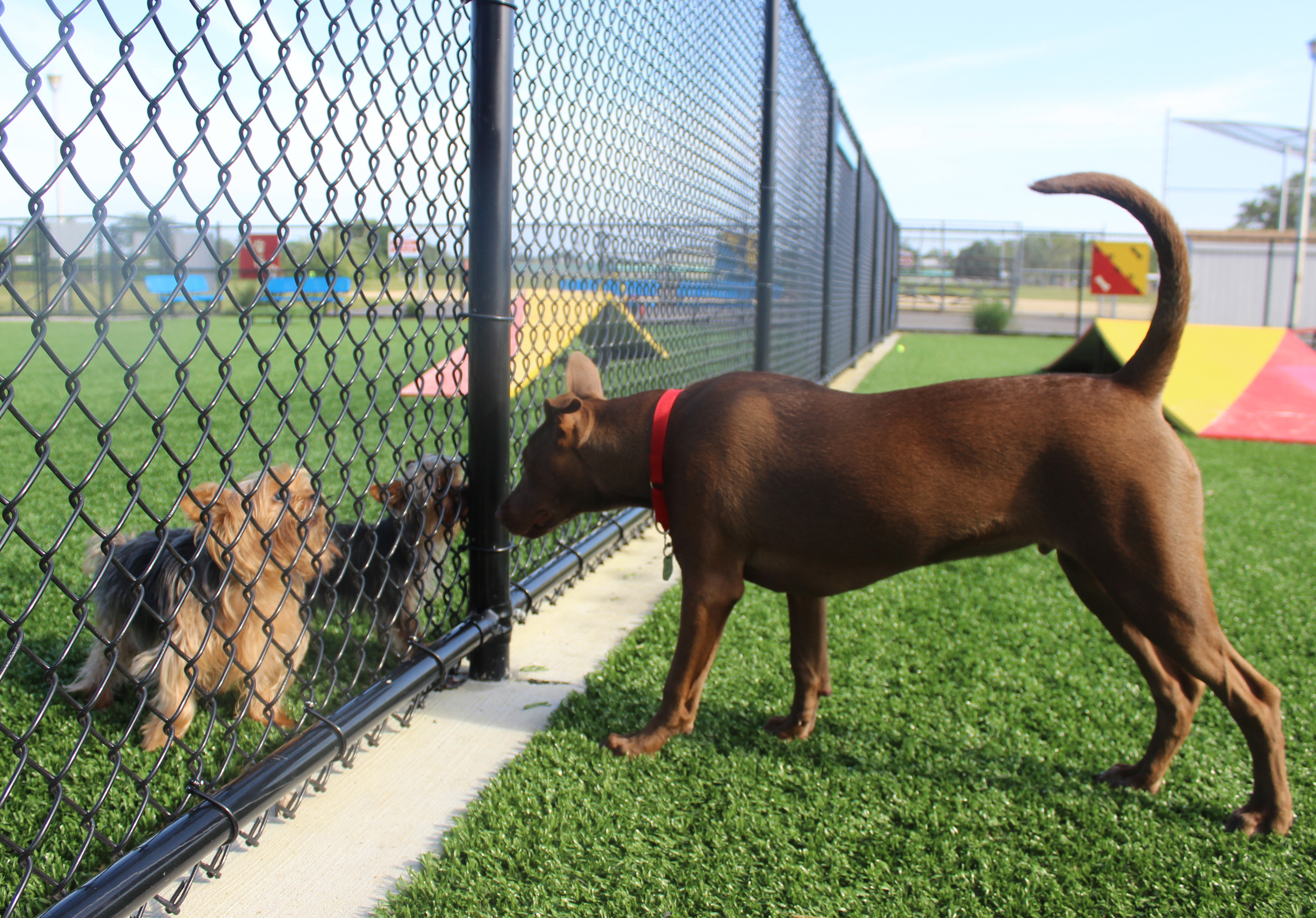 Newbridge Road Park goes to the dogs | Herald Community Newspapers ...