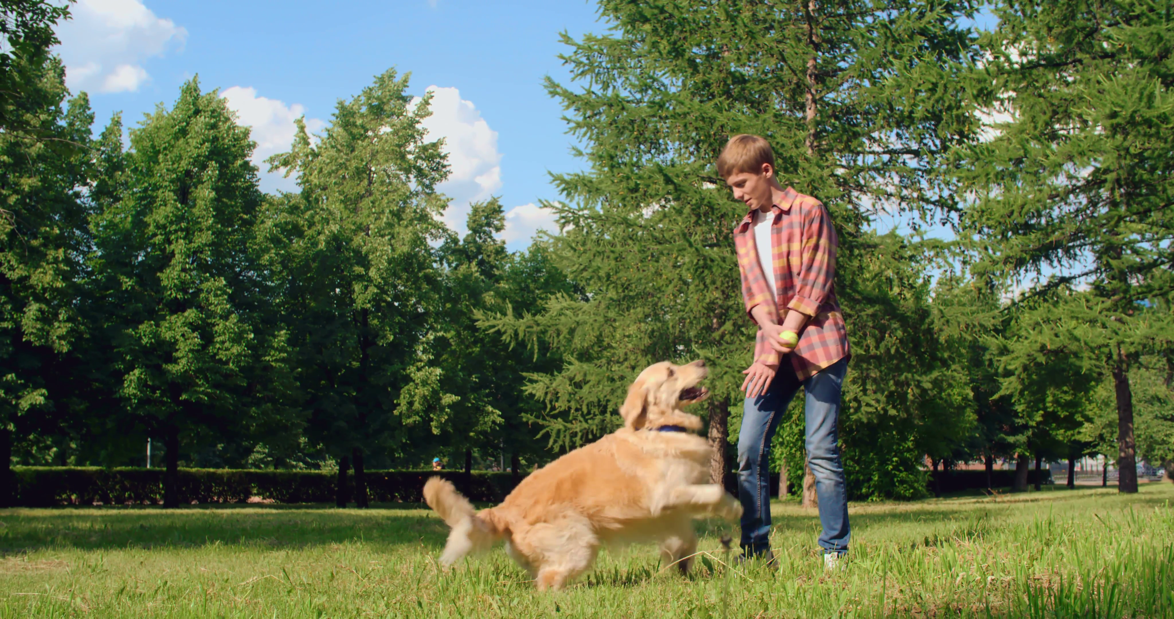 Teenager playing with his adorable dog in park Stock Video Footage ...