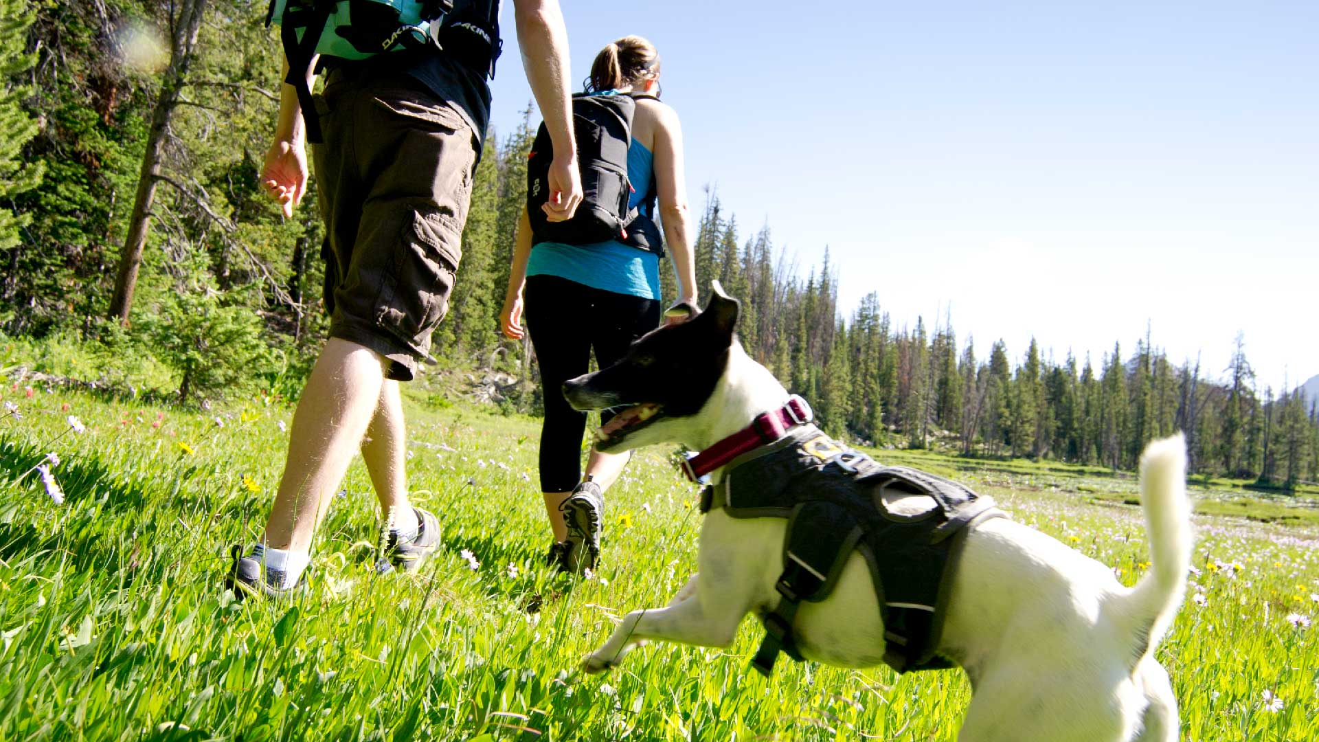Hiking with Dogs in Park City - Leash Laws Apply | Jans.com