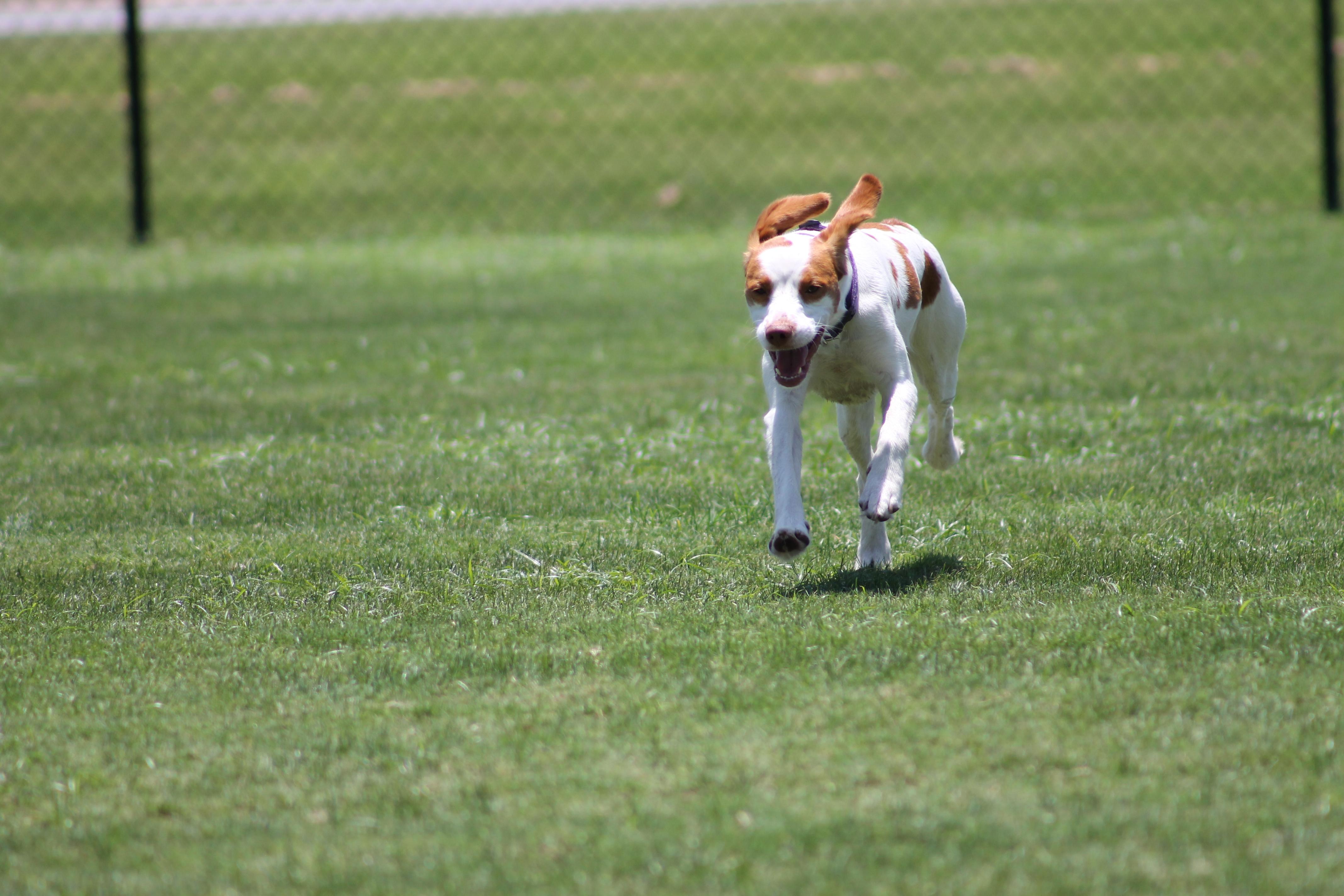 Destin Dog Park Review | Northwest Florida Outdoor Adventure