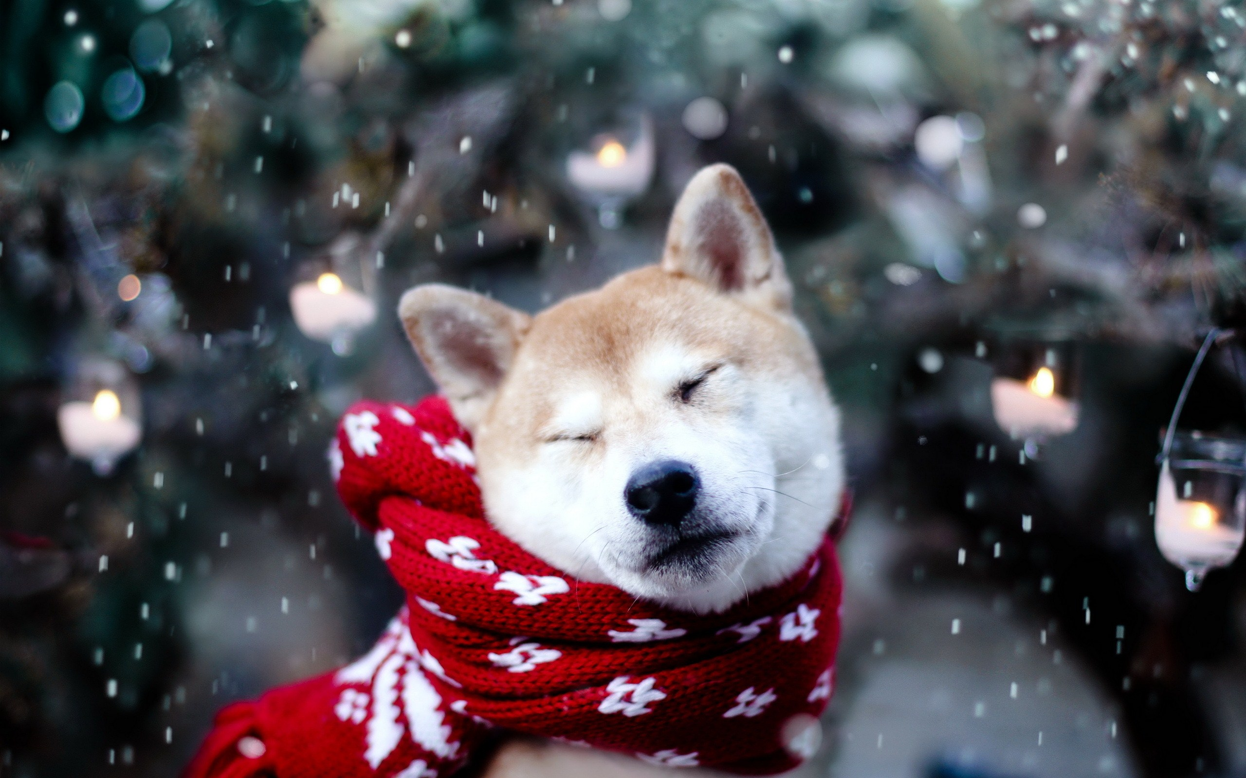 Dogs in winter photo