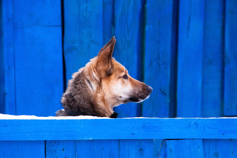 Dog on a blue background photo
