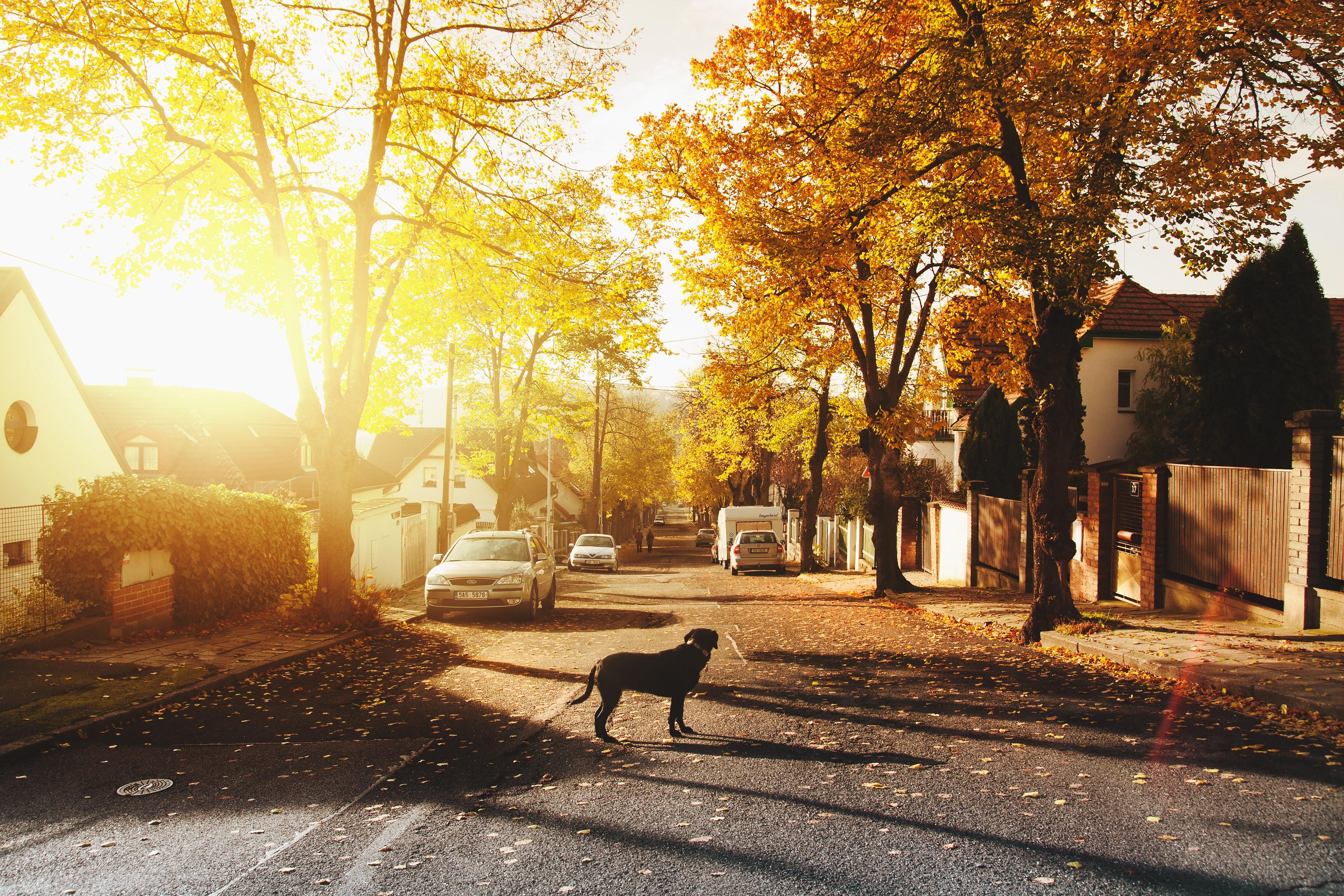 Dog on concrete road photo