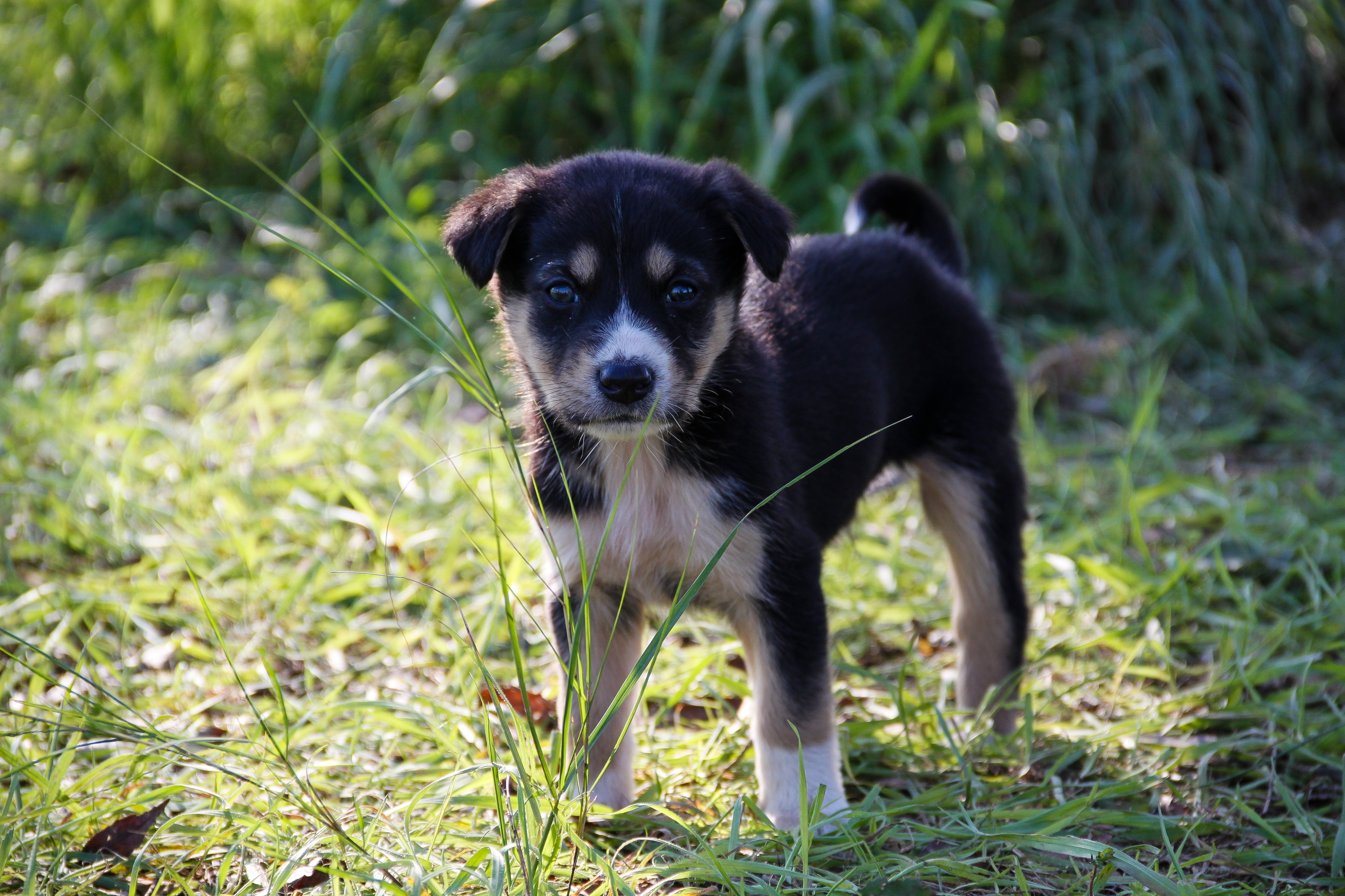 Dog on grass photo