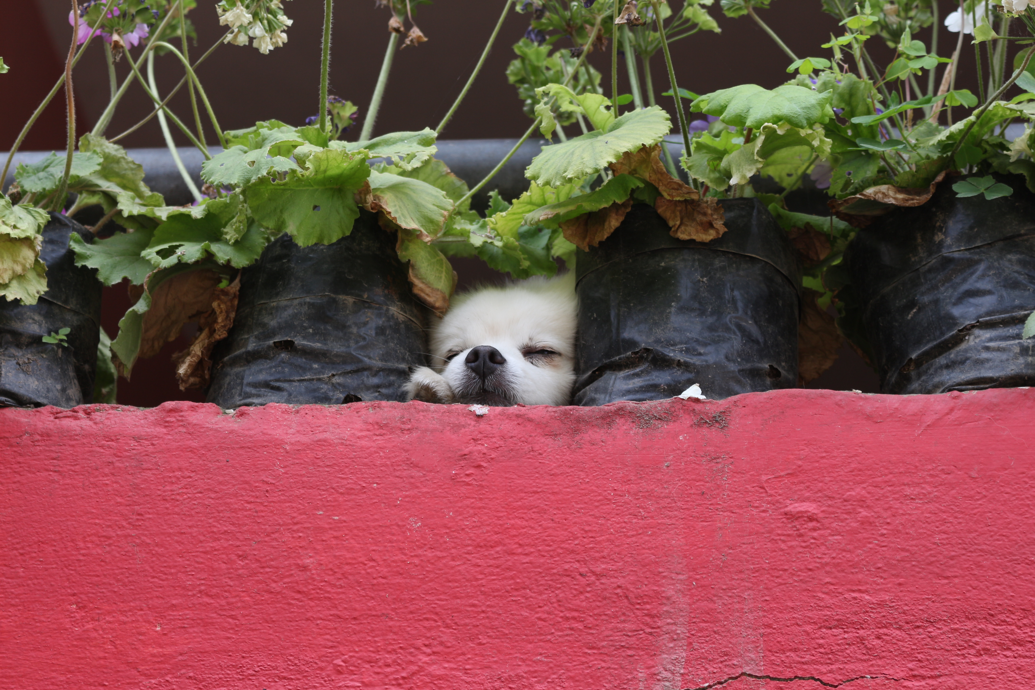 Dog or flower pot?, Animal, Cat, Kitten, Outdoor, HQ Photo