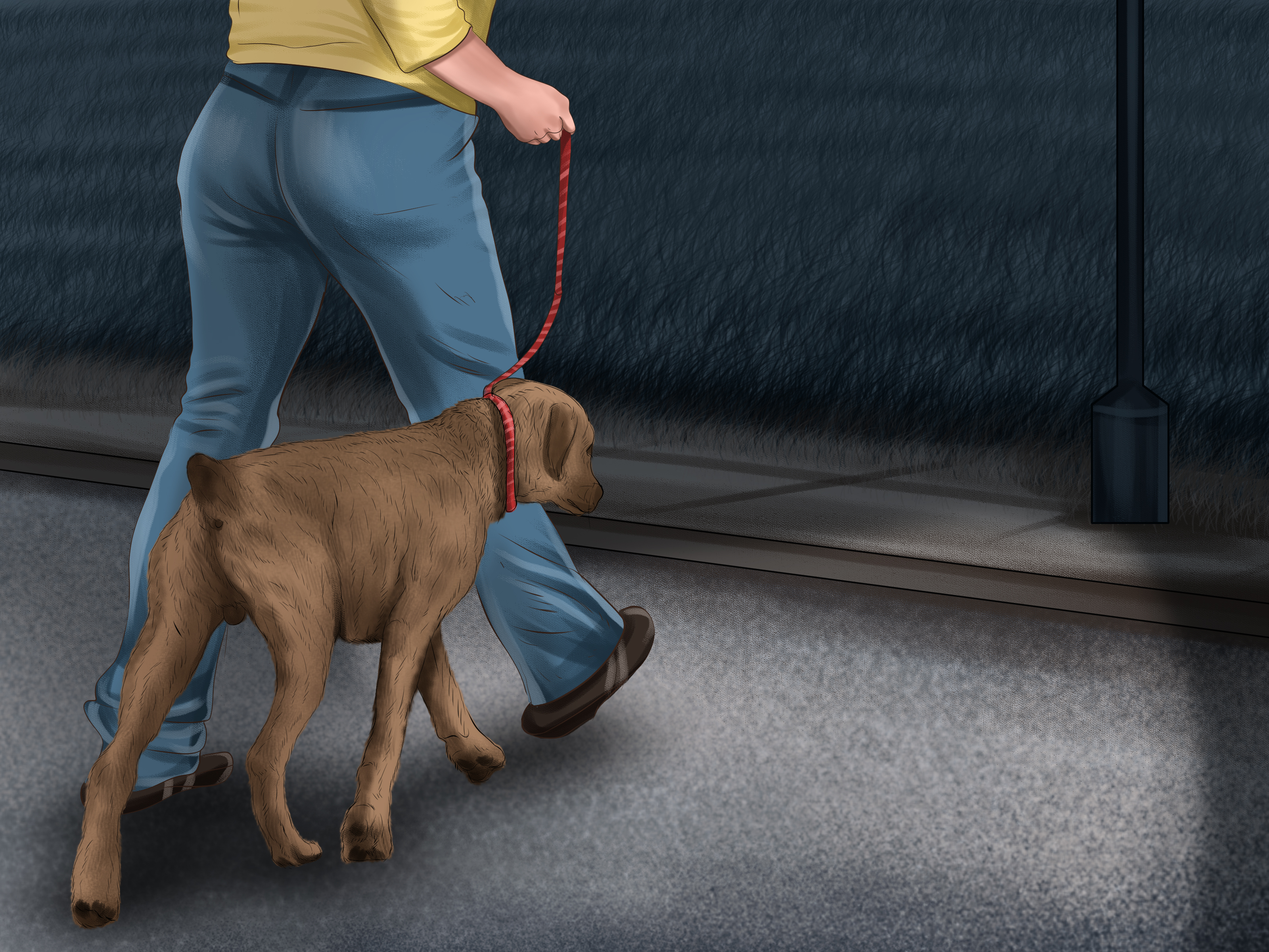 How to Walk Your Dog at Night: 14 Steps (with Pictures) - wikiHow