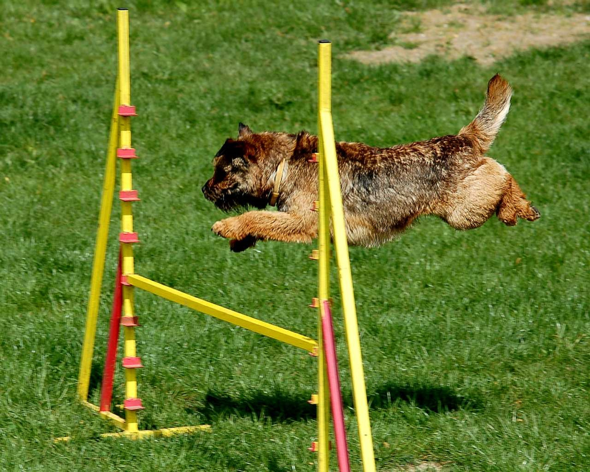 Dog Passing Obstacles, Animal, Competition, Dog, Nature, HQ Photo