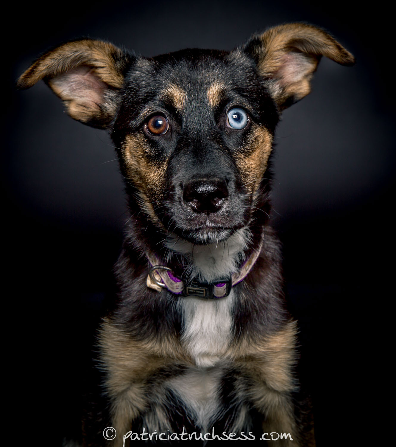 Dog portrait photo