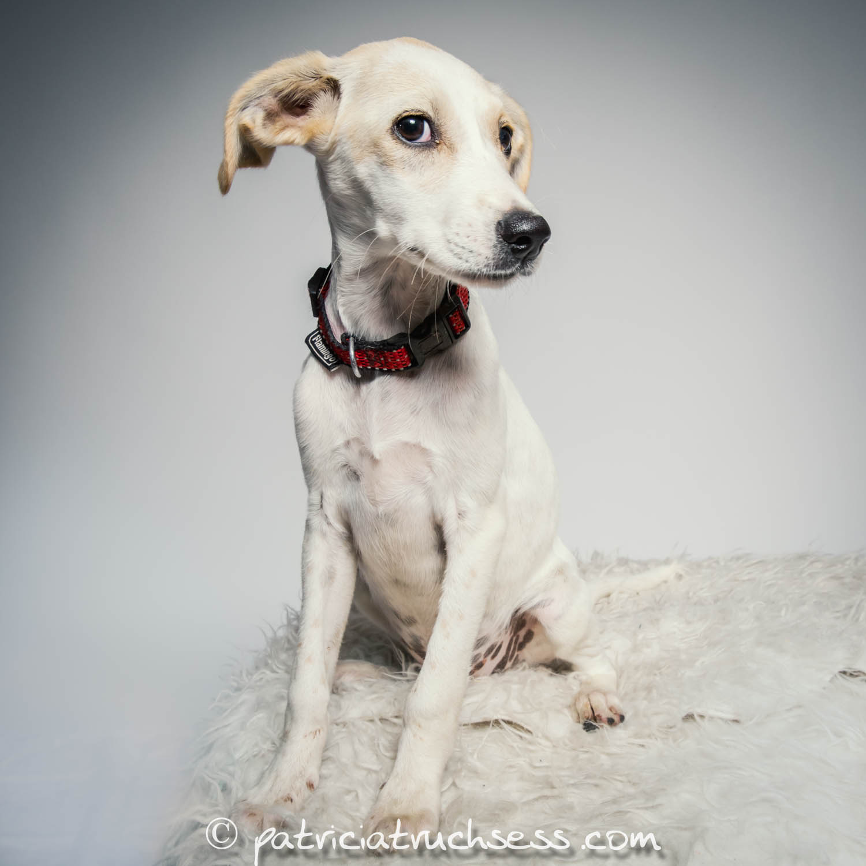 dog portrait |