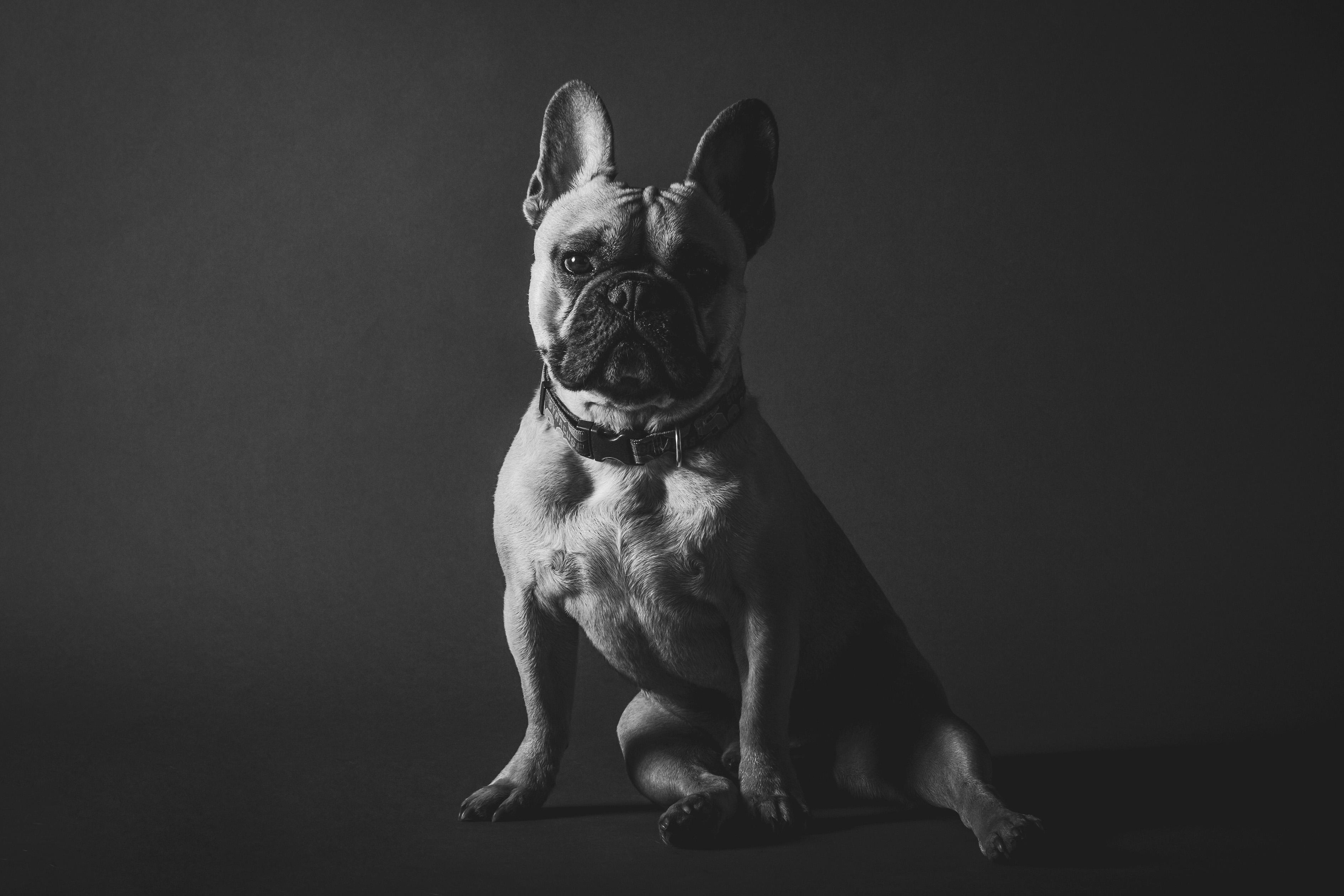 Dog Portrait Free Photo - ISO Republic