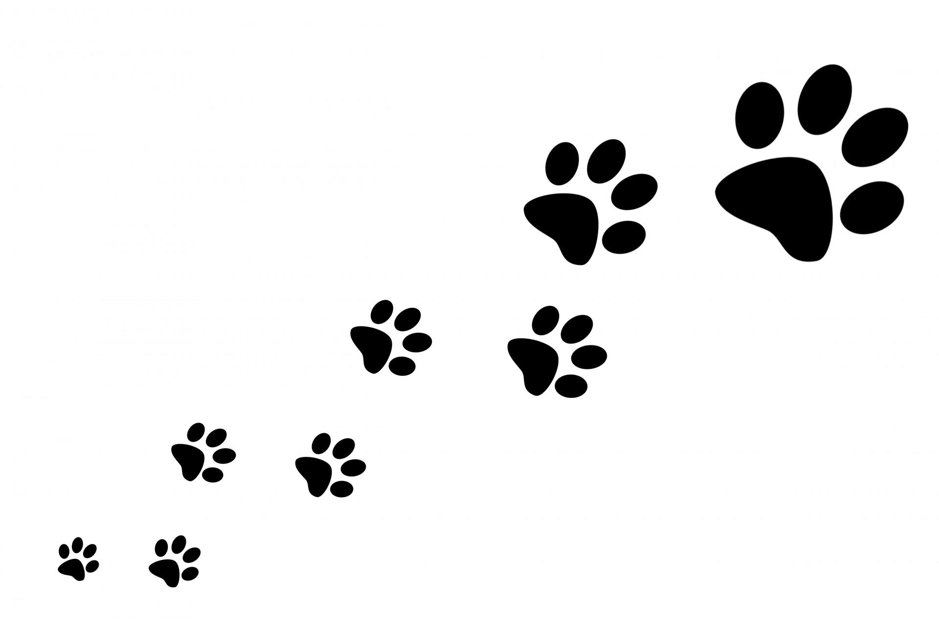 paw-prints – Canine Karma