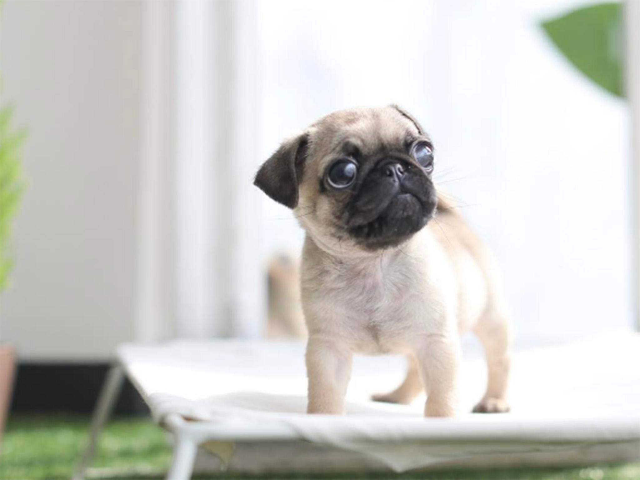 Puppy dog photo