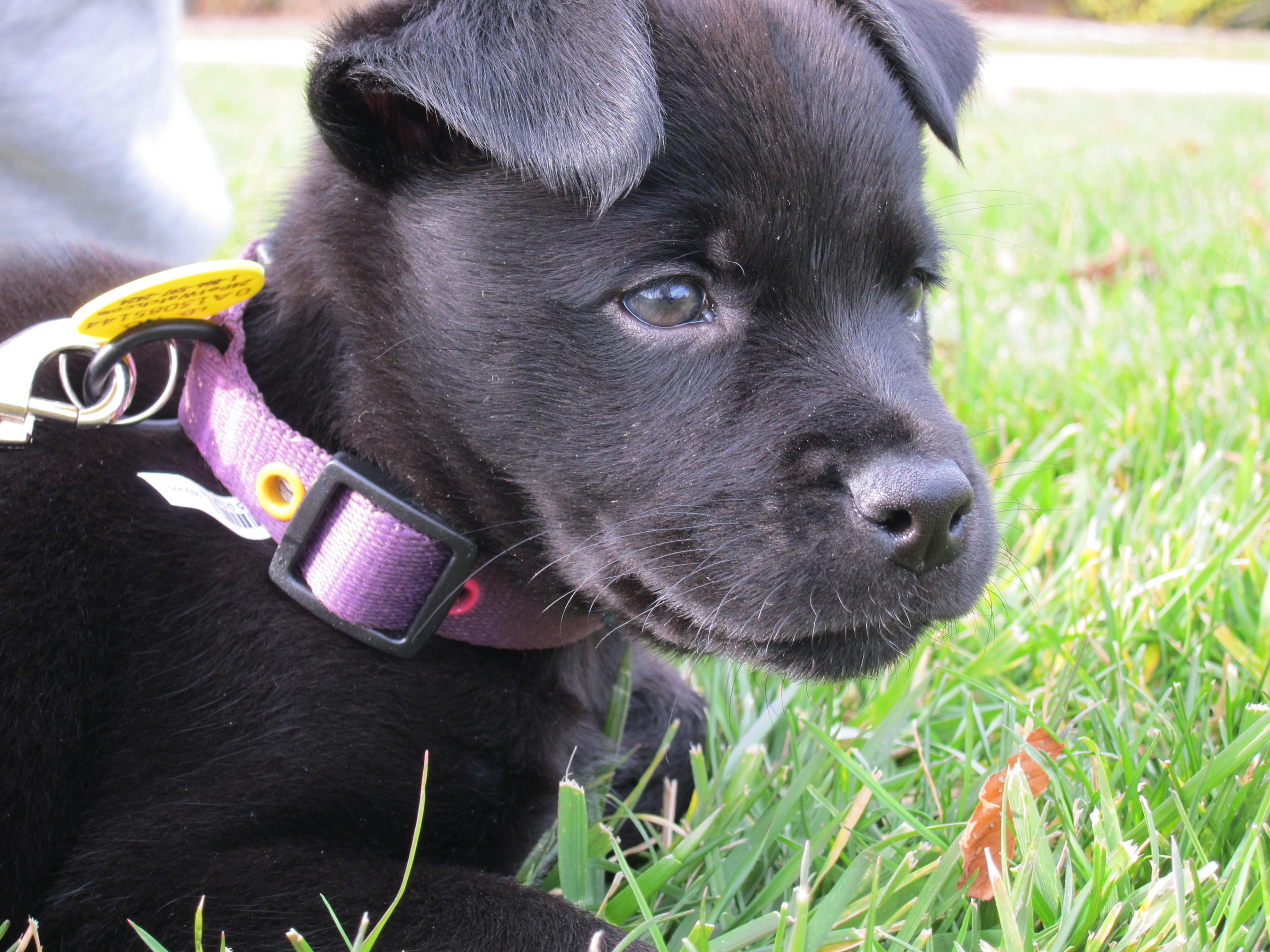 Dog - Puppy, Alert, Black, Dog, Puppy, HQ Photo
