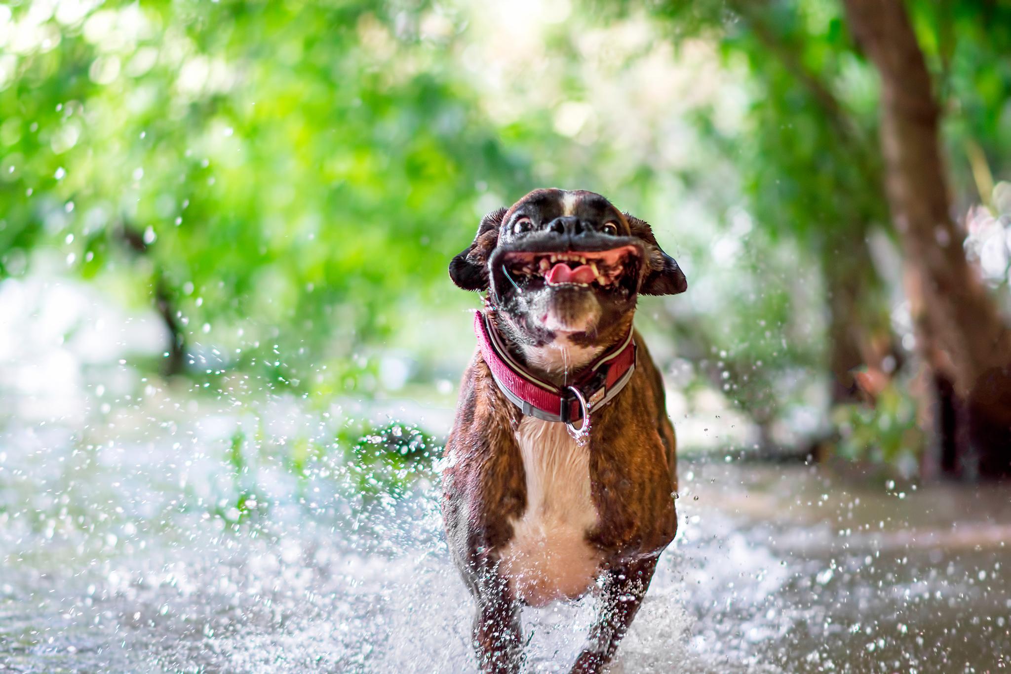 PsBattle: A dog running through water : photoshopbattles