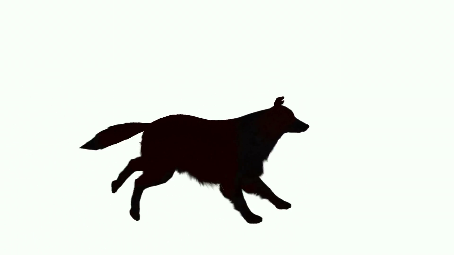 Silhouette of dog running across the screen Motion Background ...