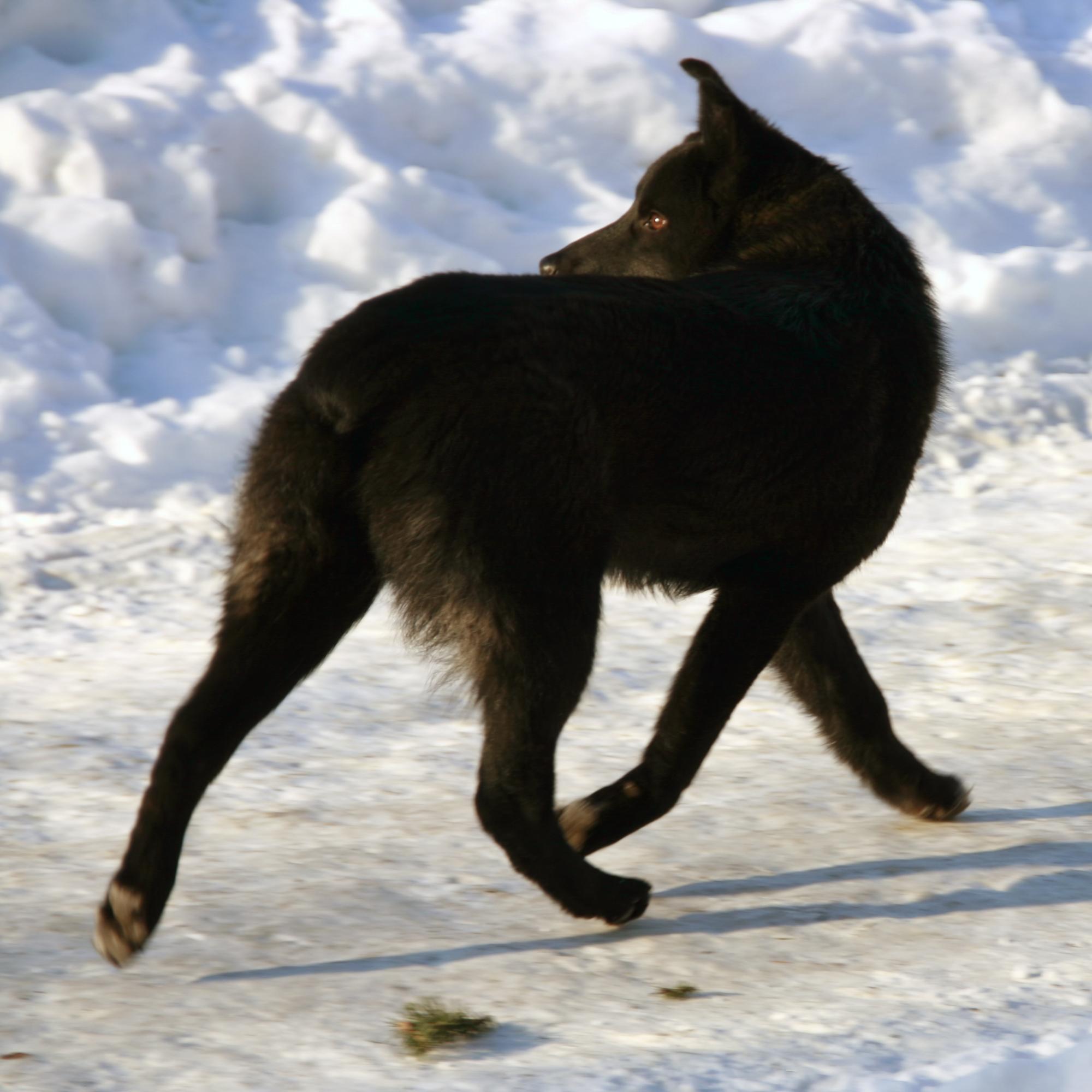 Dog Running, Black, Canine, Dog, Outdoors, HQ Photo