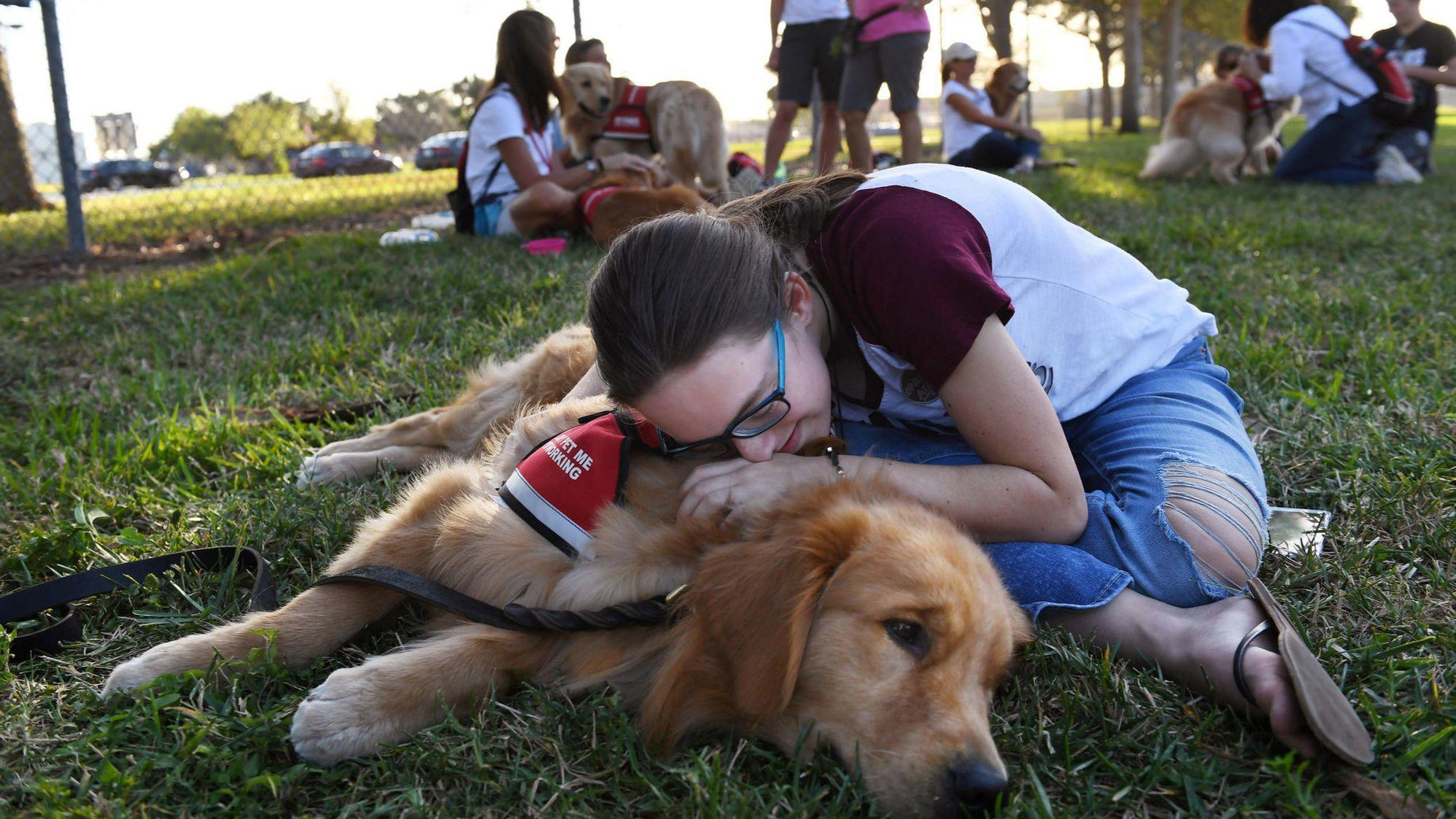 Specially trained K-9s could prevent school shootings   Opinion ...