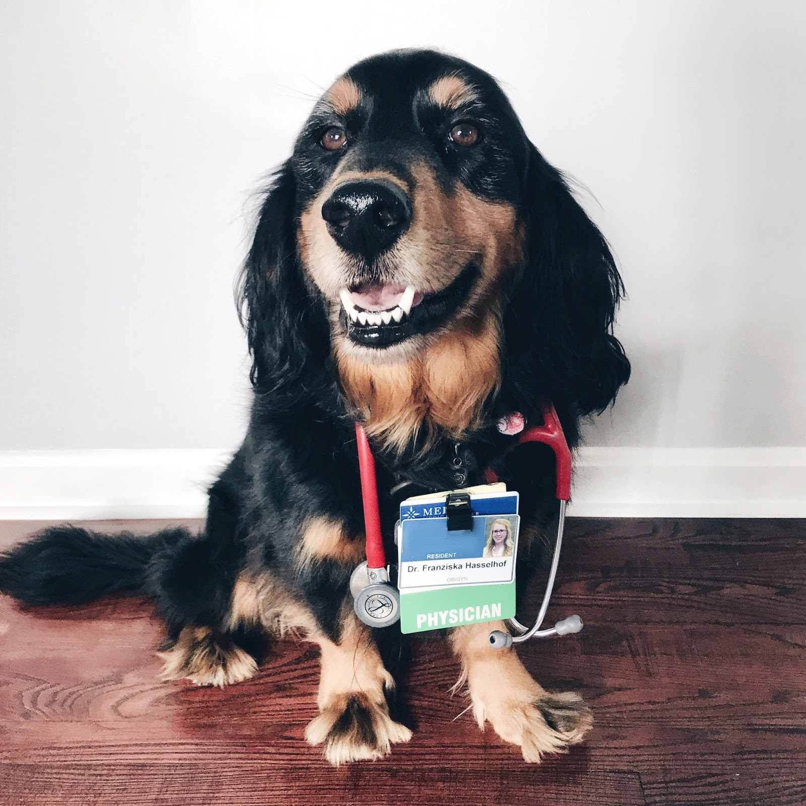 Franish: having a dog in medical school & residency