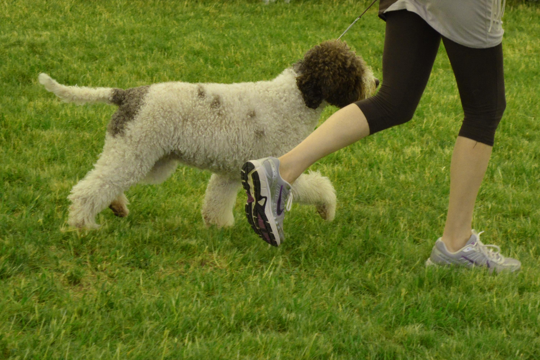 Dog school, Animal, Run, Train, Teaching, HQ Photo