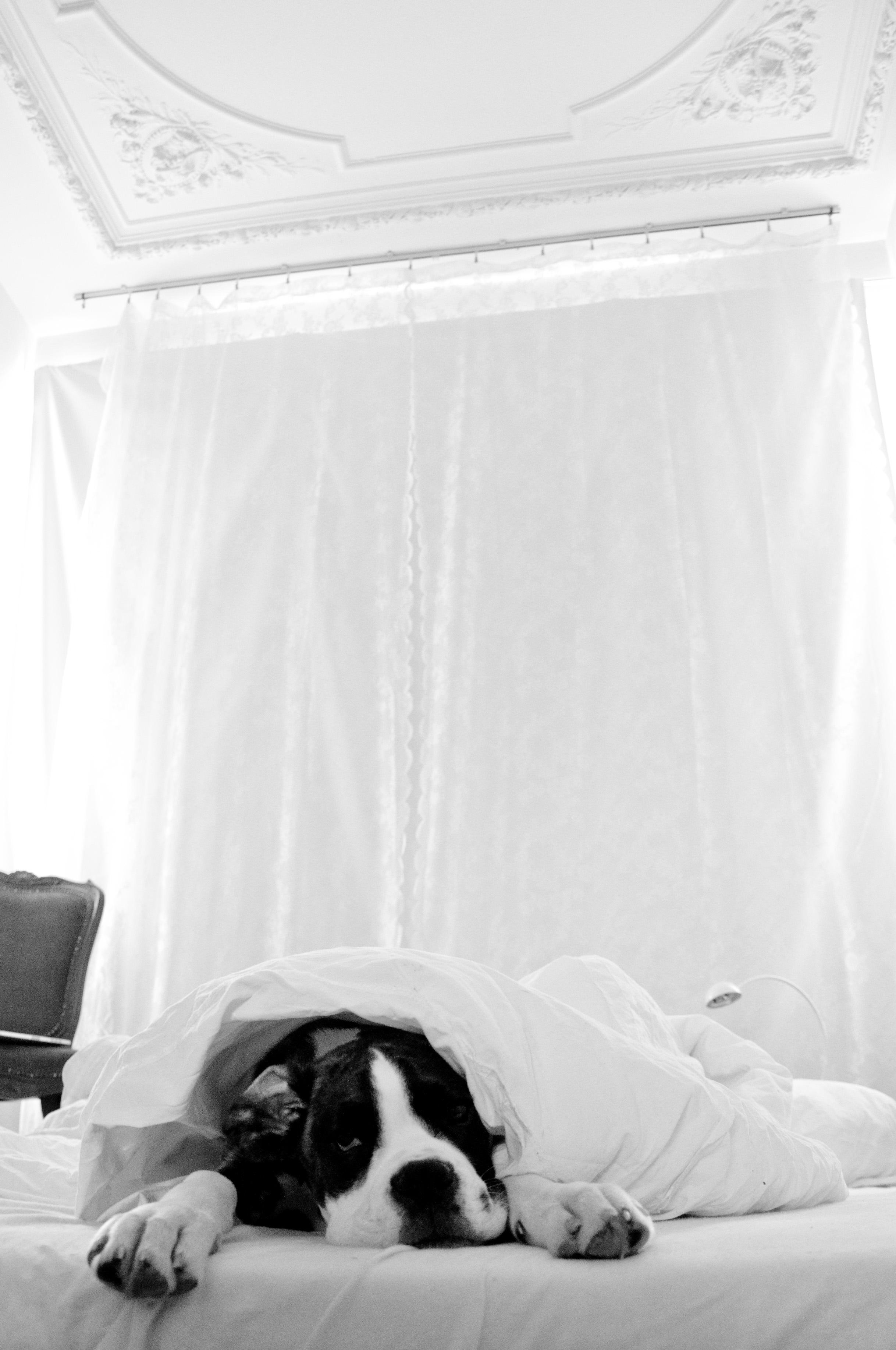 Dog sleeping in bed photo