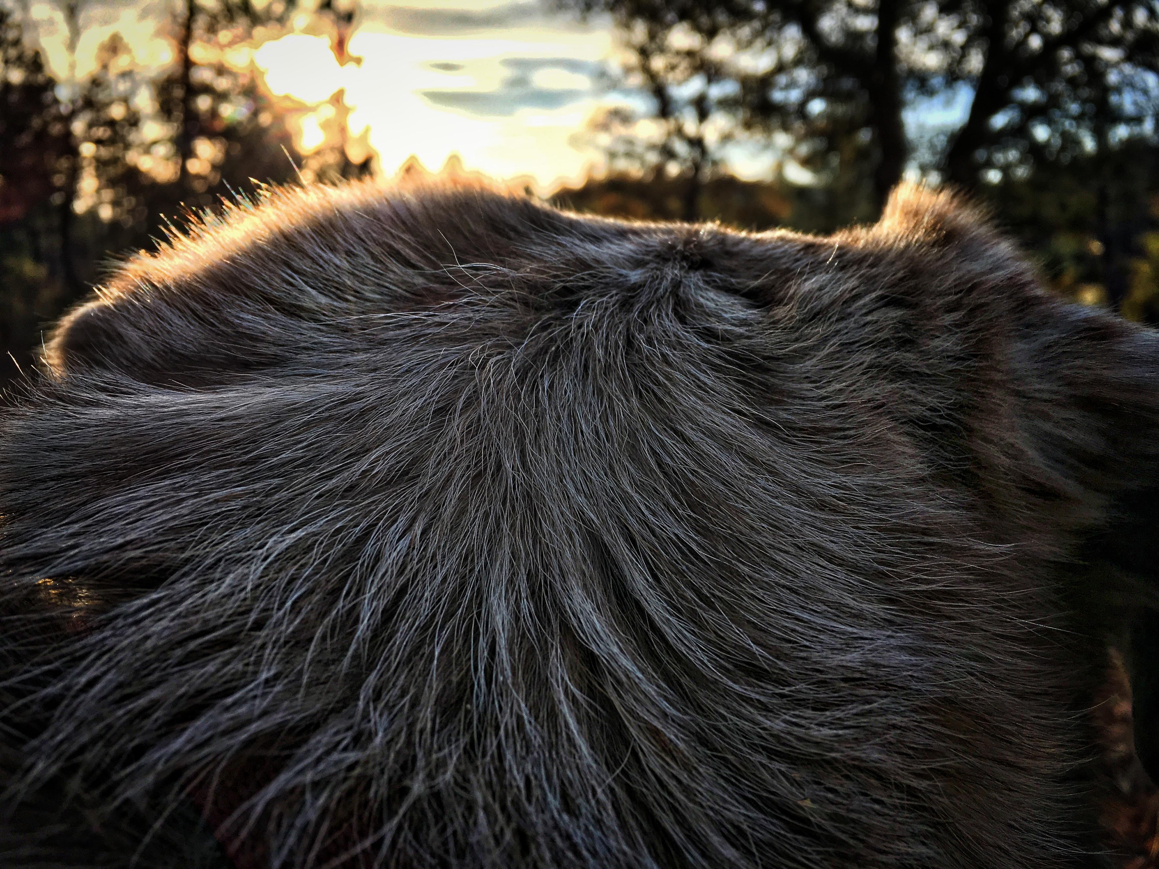 Dog watched sunset photo