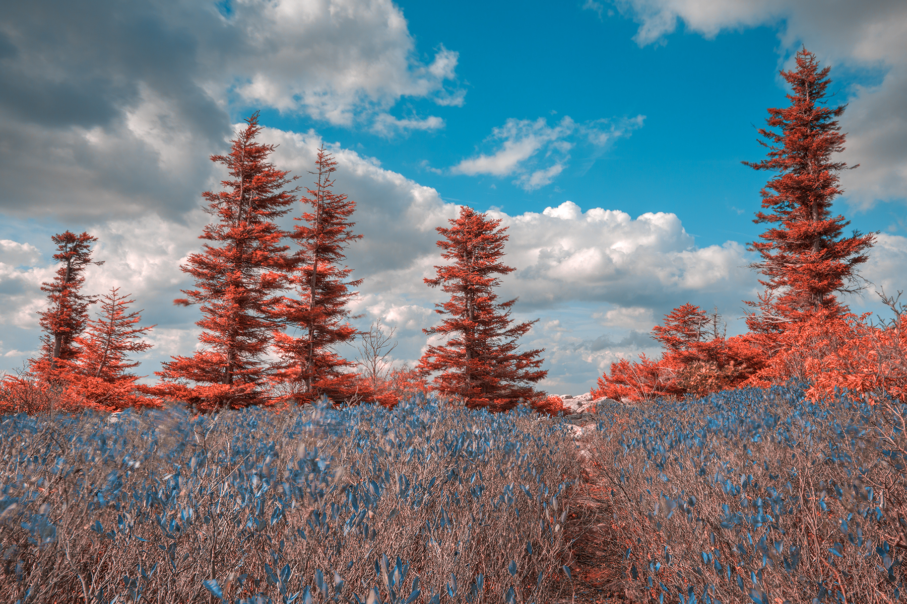 Dolly sods dreamland - hdr photo