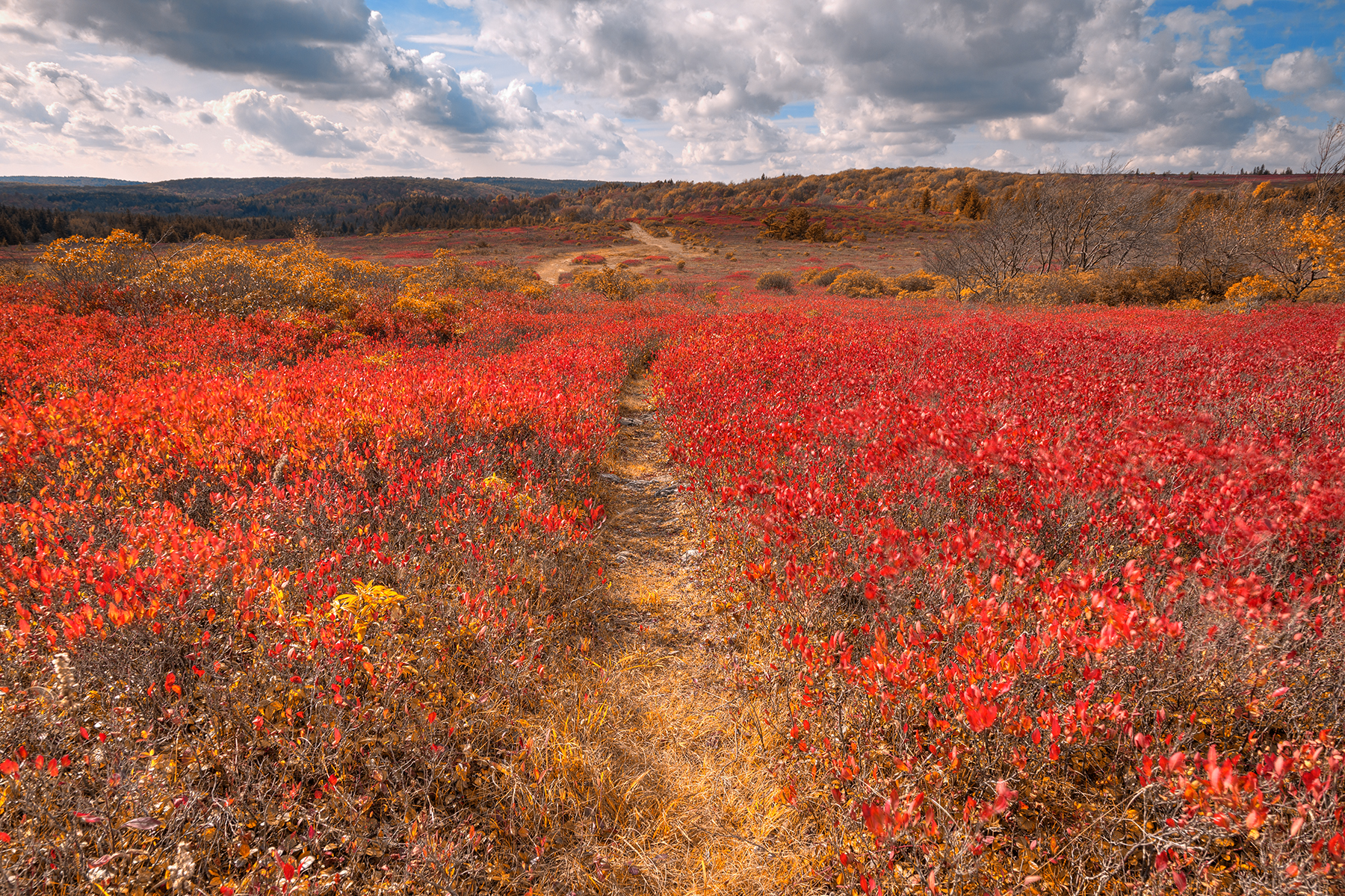 Dolly sods huckleberry trail - indian summer hdr photo