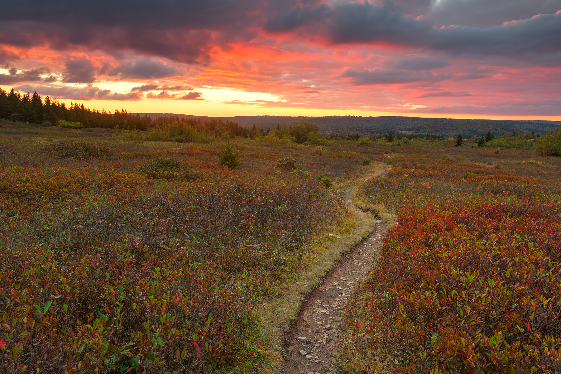 Dolly sods twilight trail - hdr photo