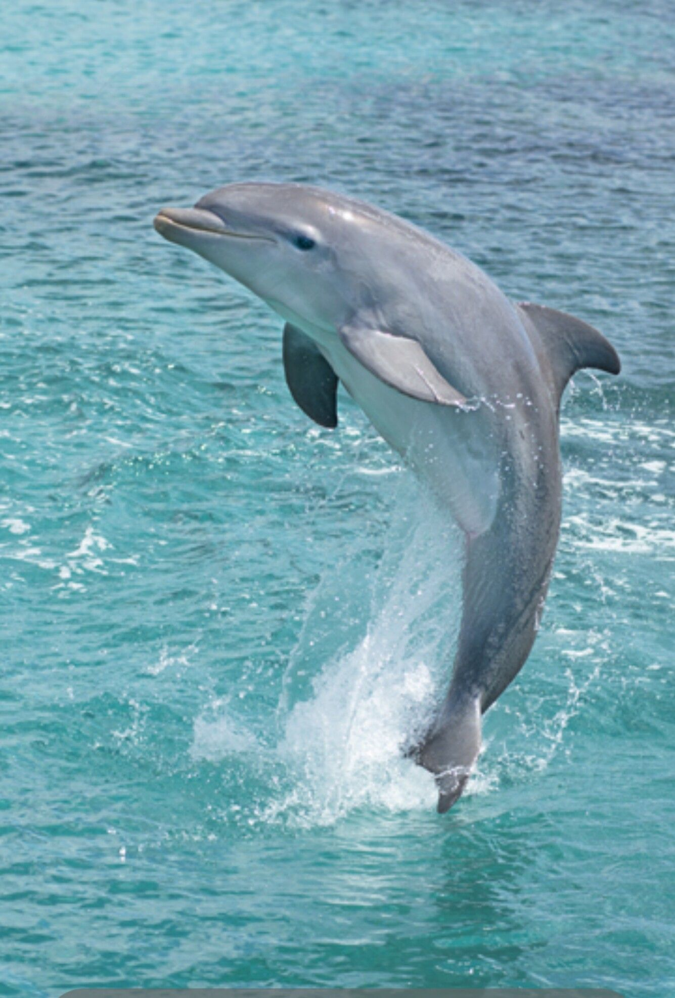 Beauty in the wild | *Dolphins | Pinterest | Animal, Creatures and Ocean