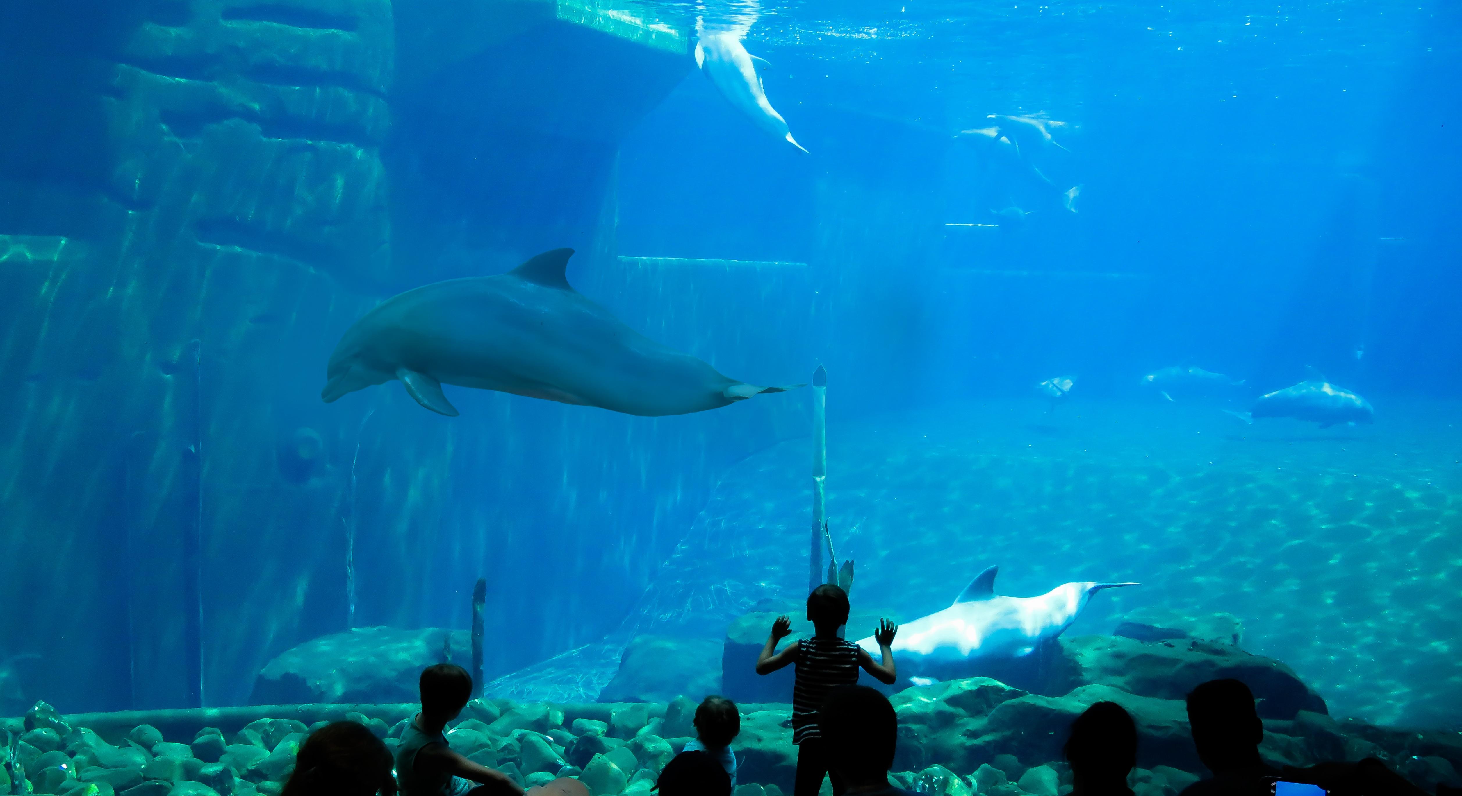 Dolphin in the Aquarium, Activity, Aquarium, Crowd, Dolphin, HQ Photo