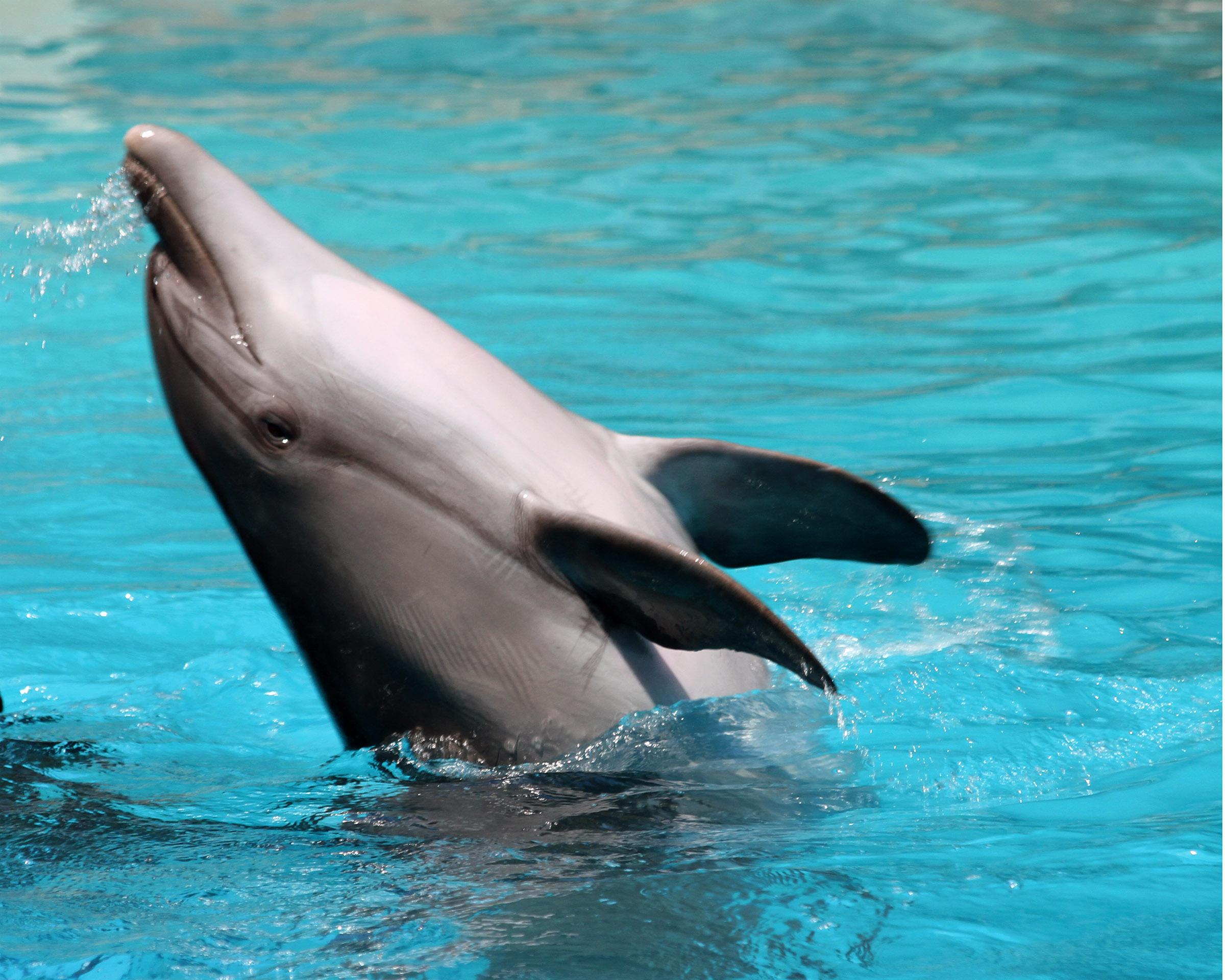 Dolphin, Animal, Underwater, Teeth, Swim, HQ Photo