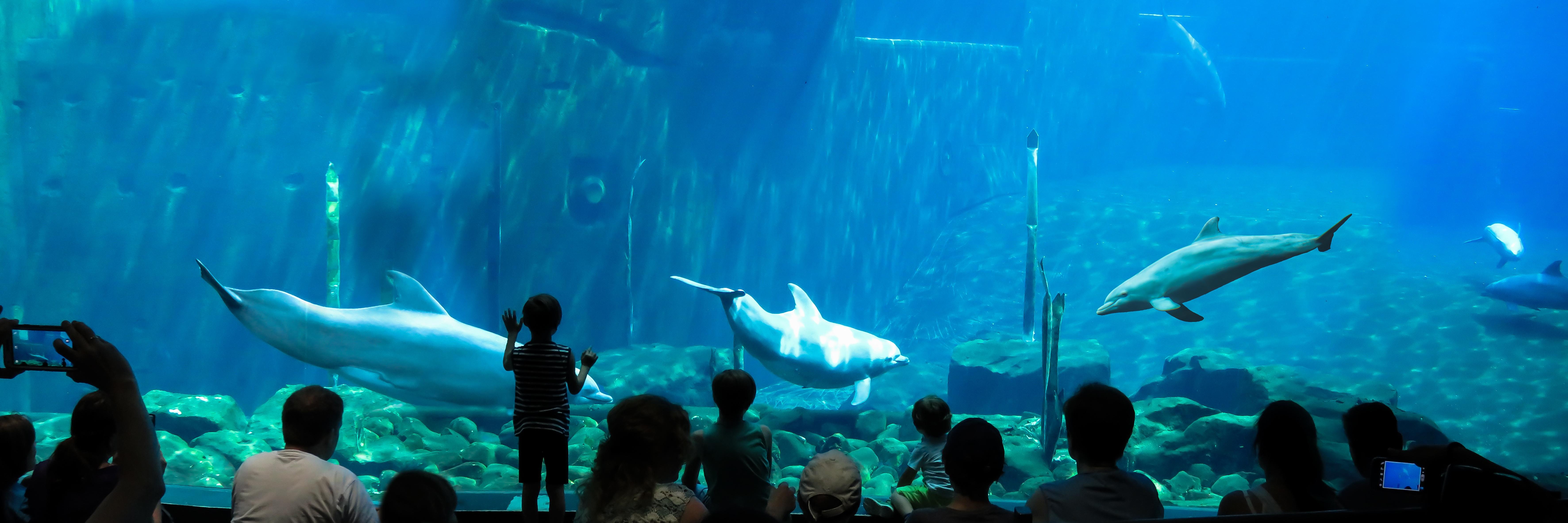 Dolphins in the aquarium photo