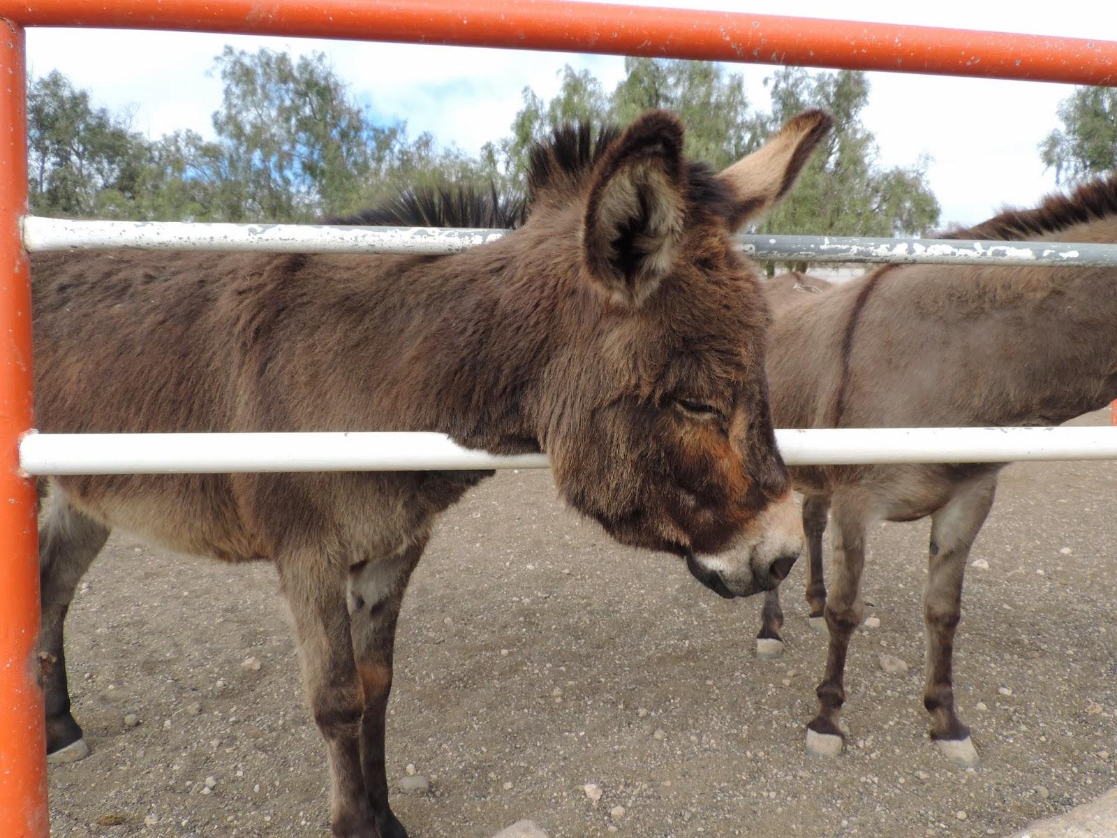 Donkey's torn photo