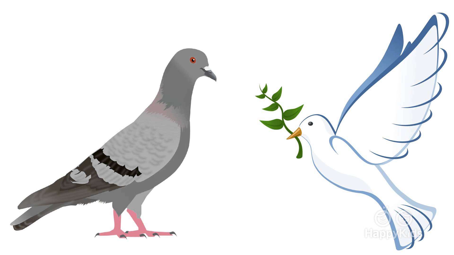 Free photo: Dove - Alive, One, Waiting - Free Download ...