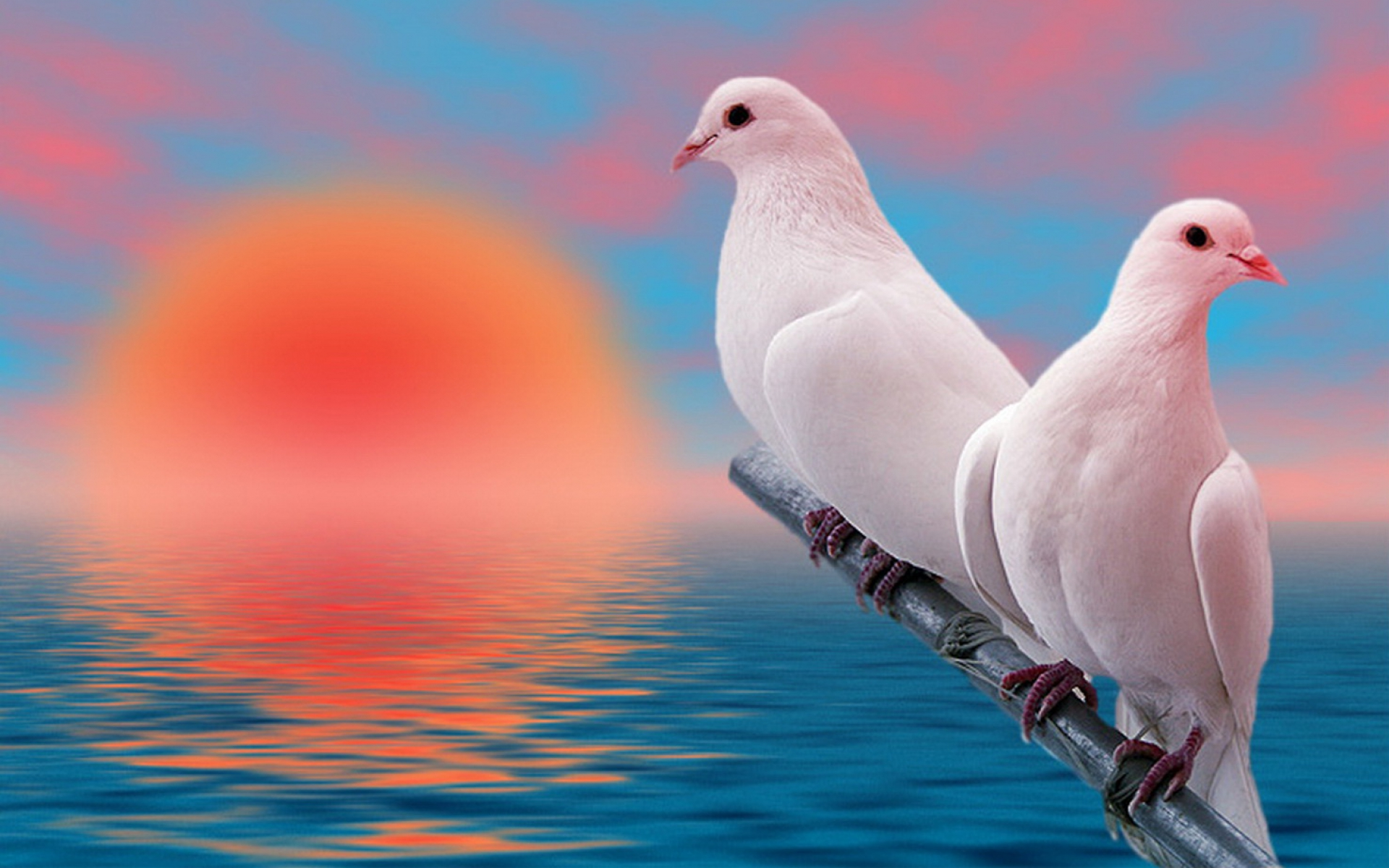 free photo dove bird pigeon wild nature free download jooinn