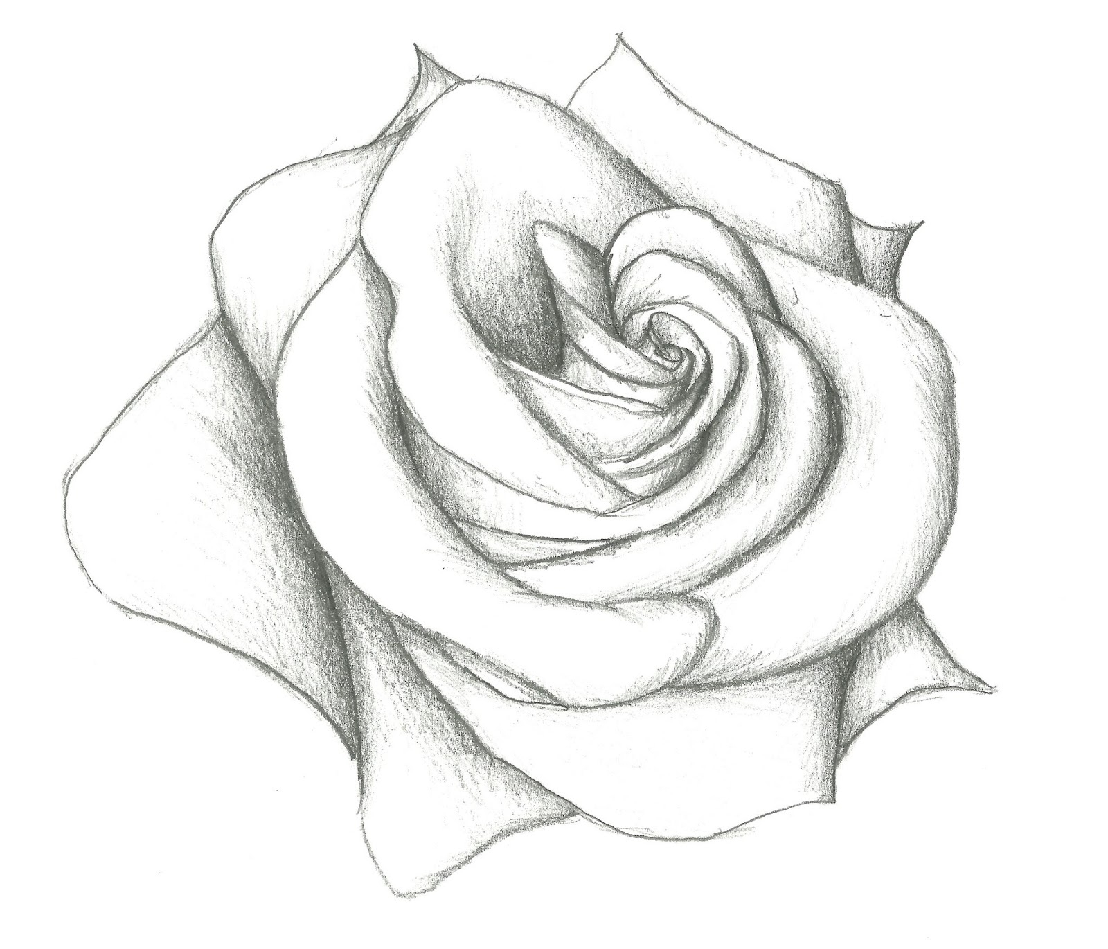 Rose Drawing at GetDrawings.com | Free for personal use Rose Drawing ...