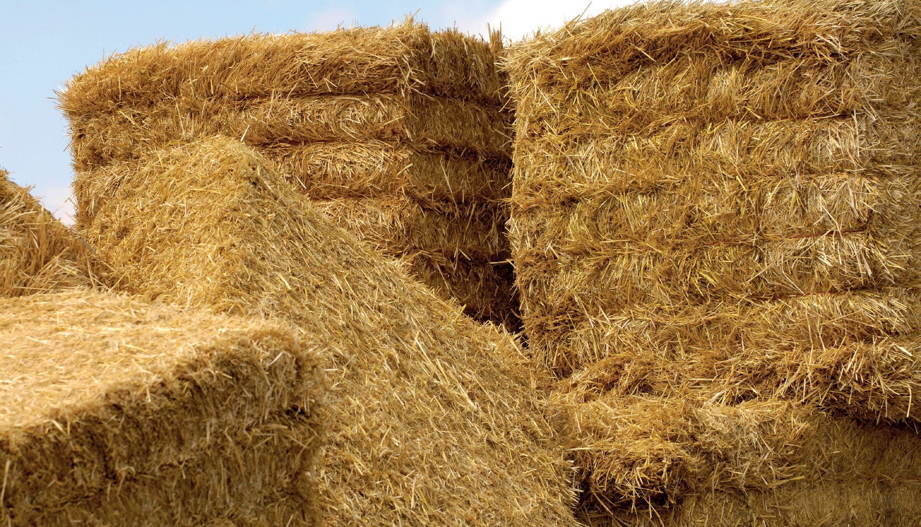 Haylage & Dried Grass - REQUIREMENT - HORSE FEED