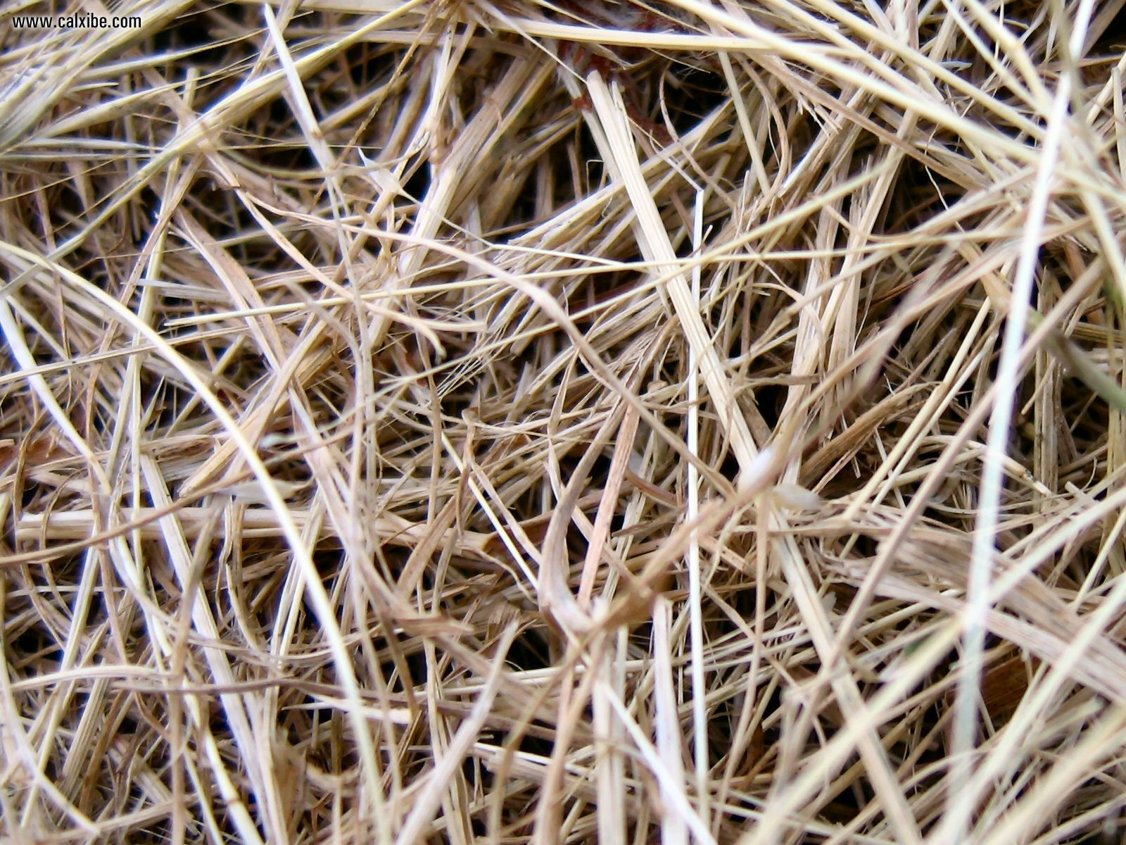 Development: Dried Grass, picture nr. 13291