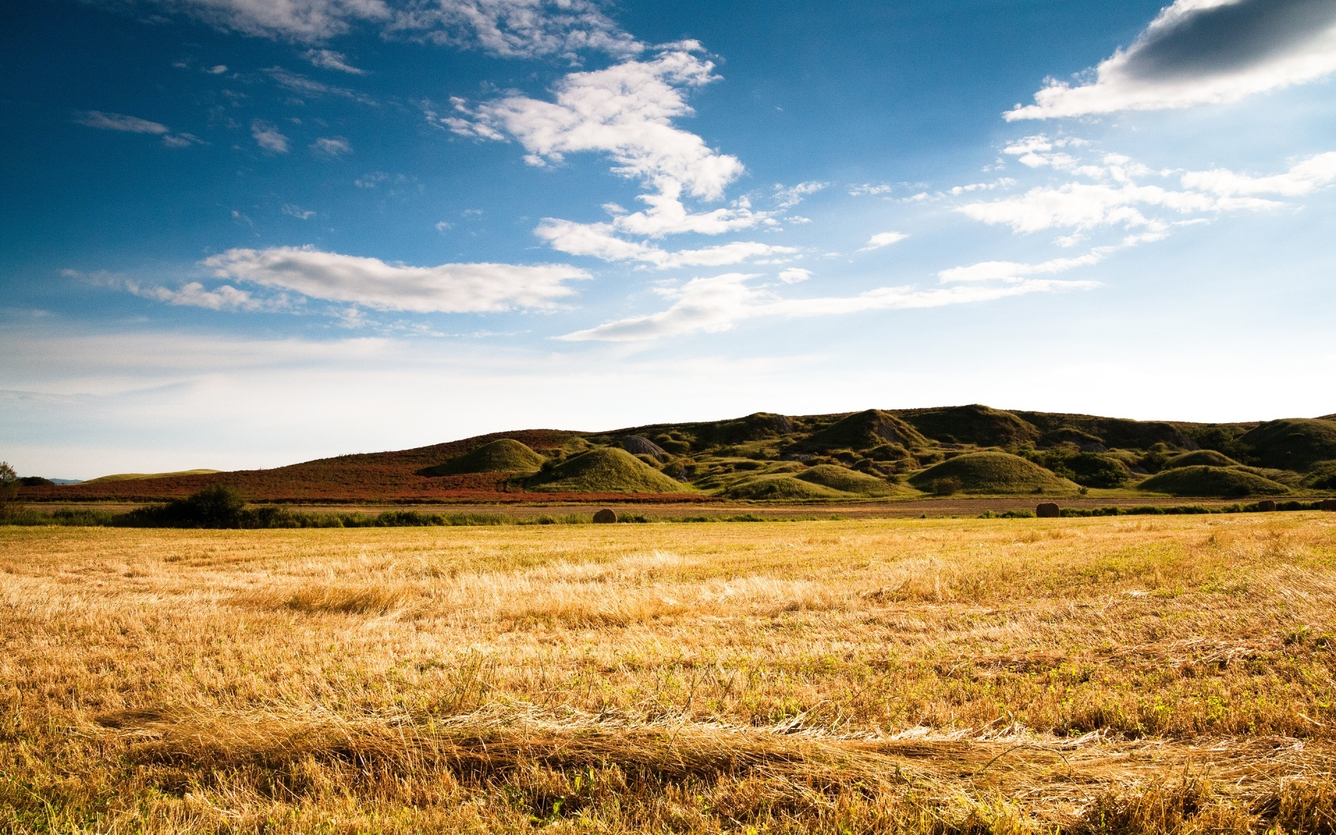 dry grass field background. Dry Grass HD Wallpaper #2072493 Field Background