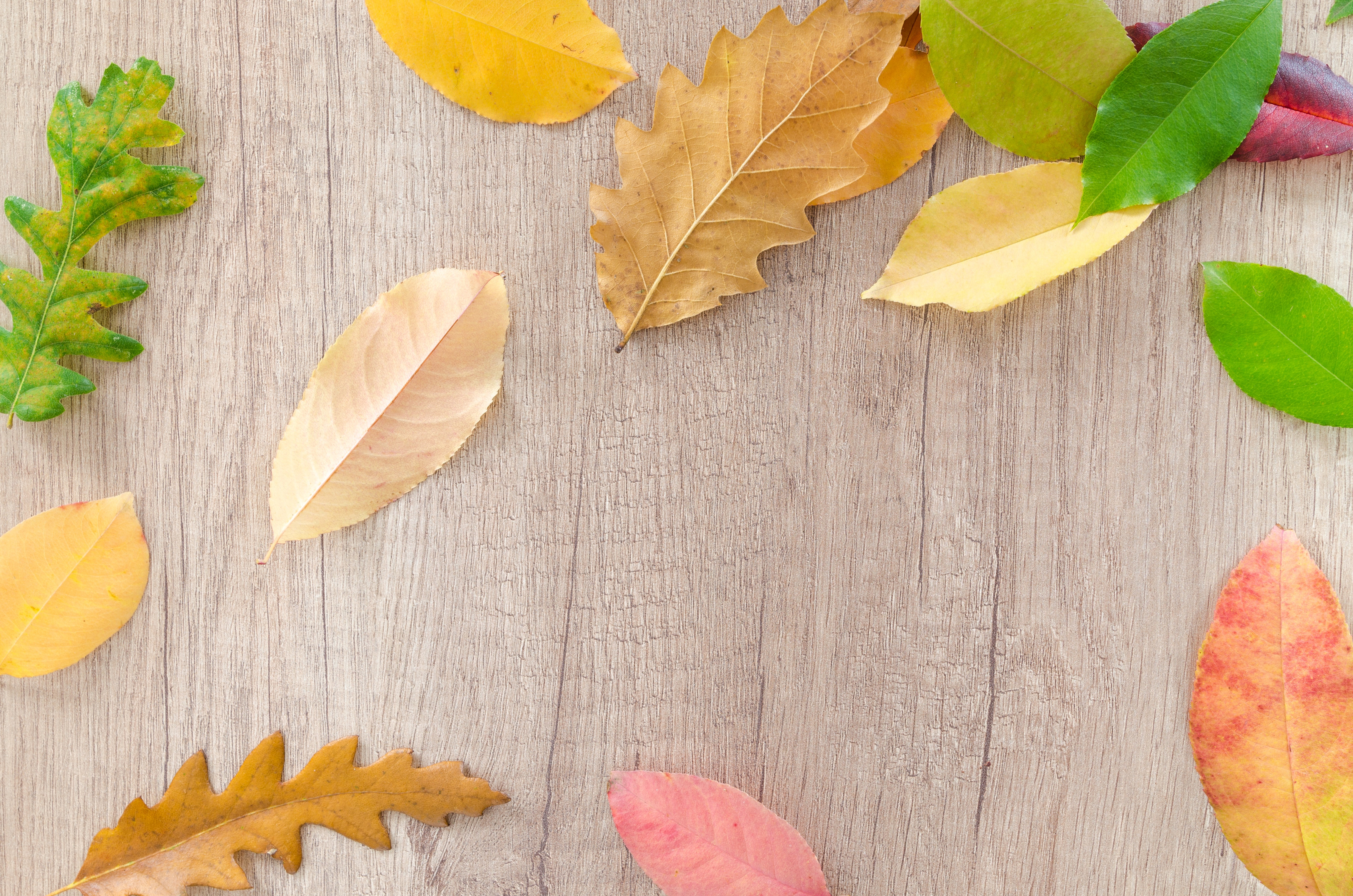 Dried Leaves On Brown Wooden Table, Autumn, Colorful, Dry, Dry leaves, HQ Photo