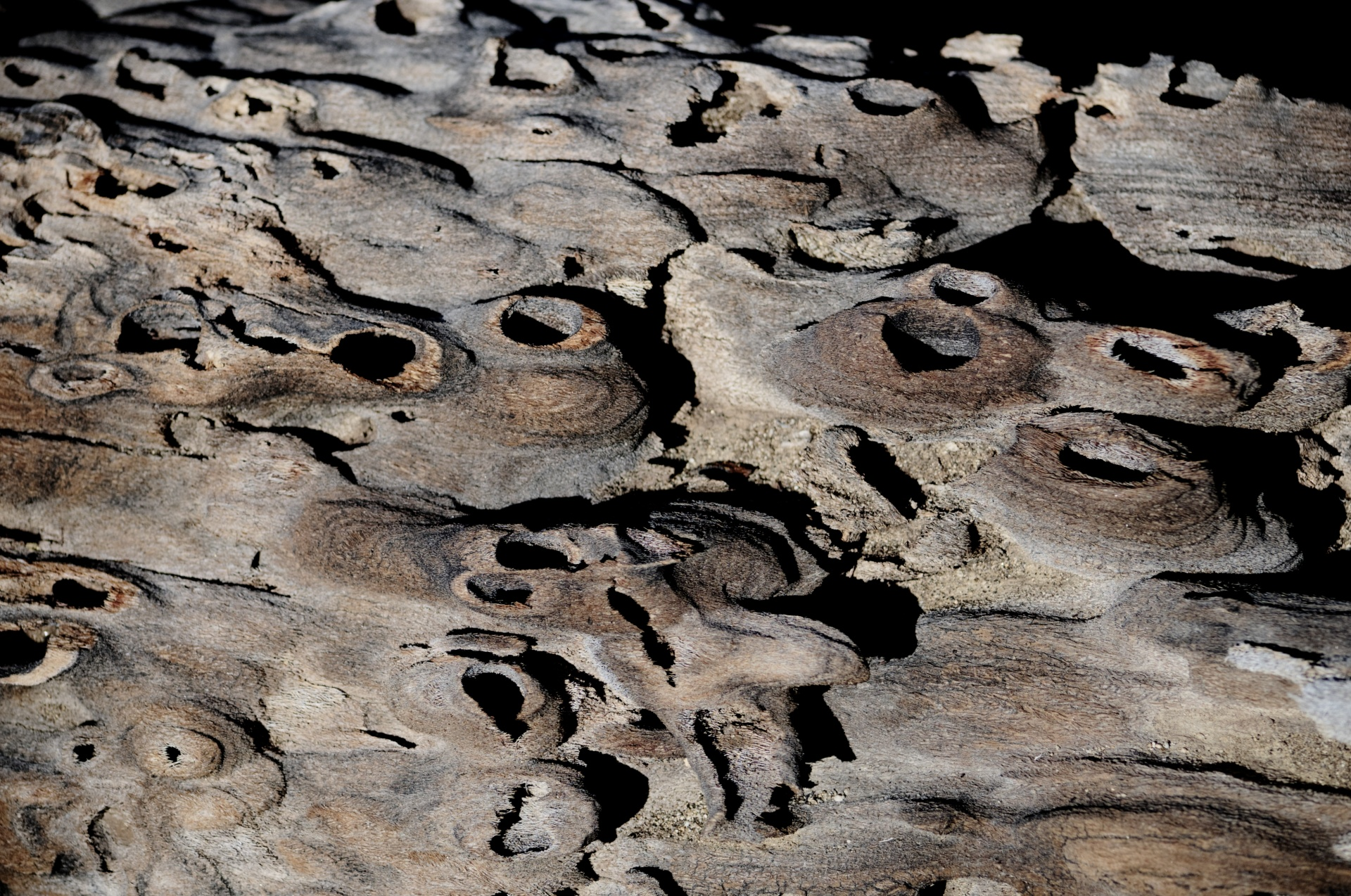 Desert Driftwood Background Free Stock Photo - Public Domain Pictures