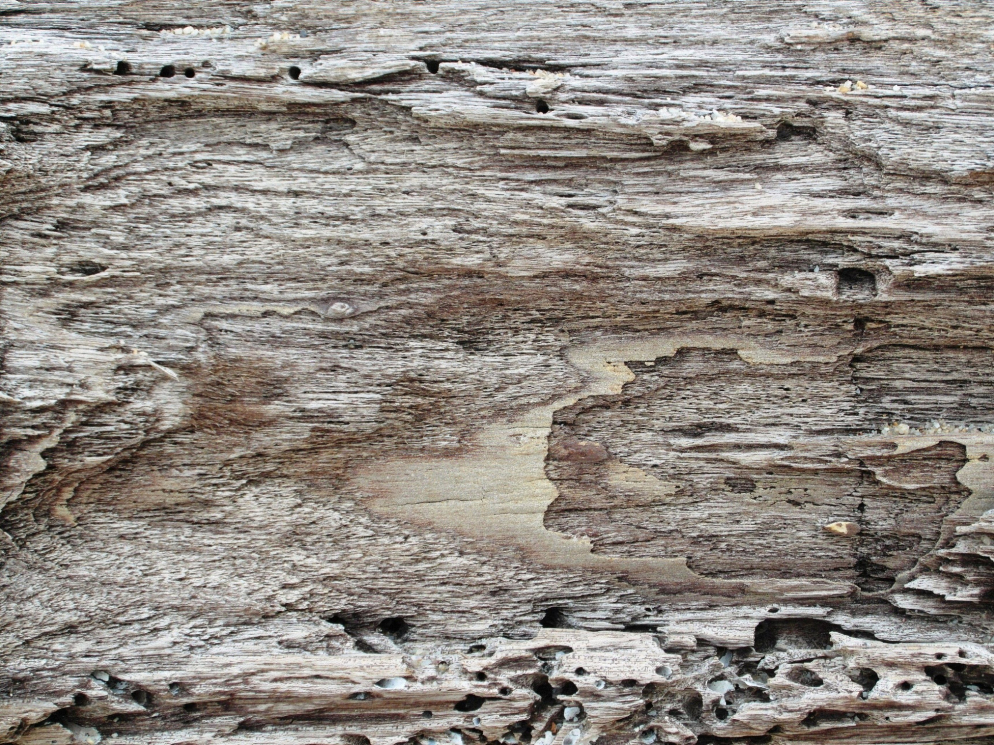 Driftwood Background, Abstract, Old, Worm, Wooden, HQ Photo